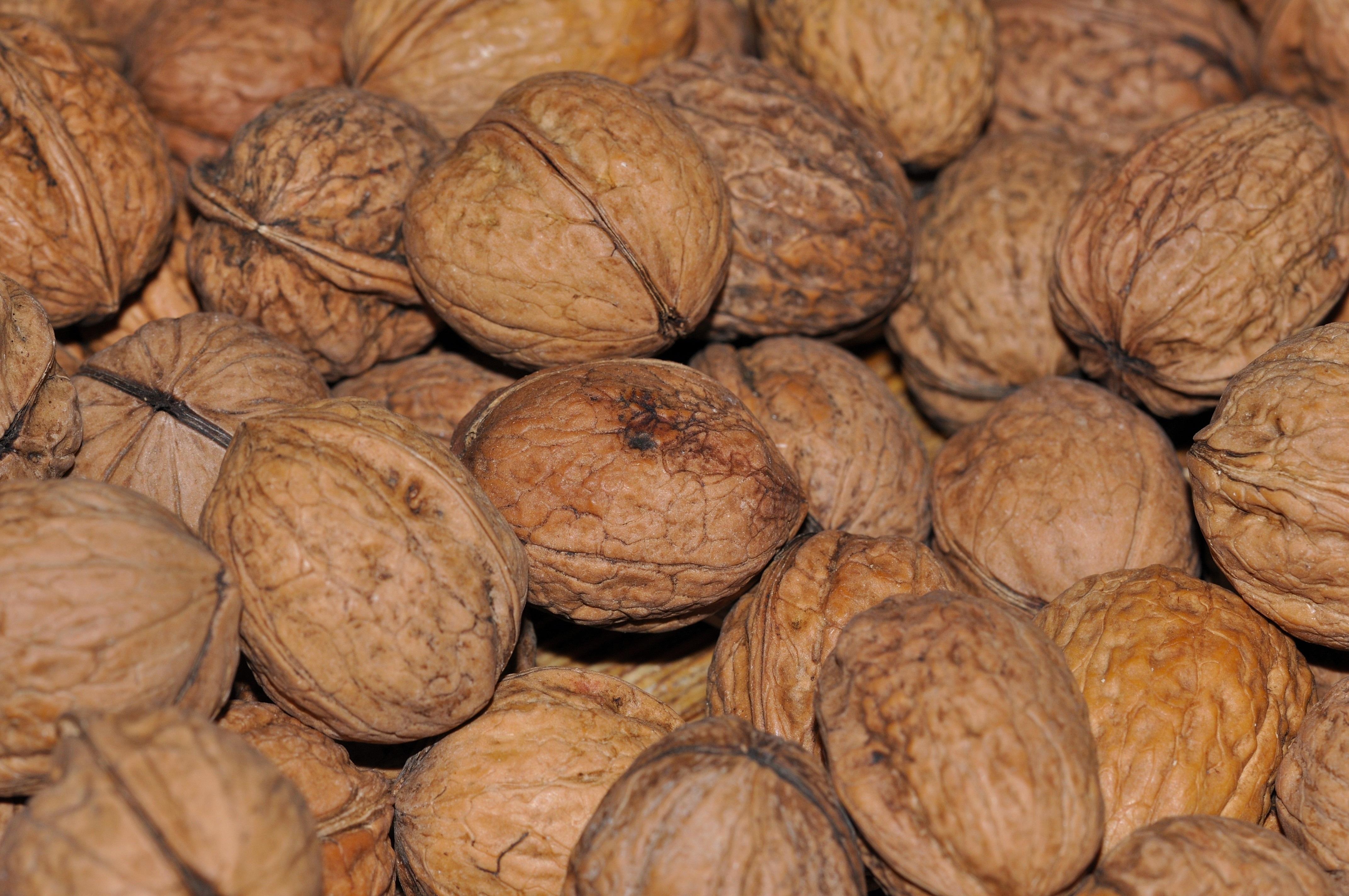 Is a walnut a nut humbrol acrylic varnish