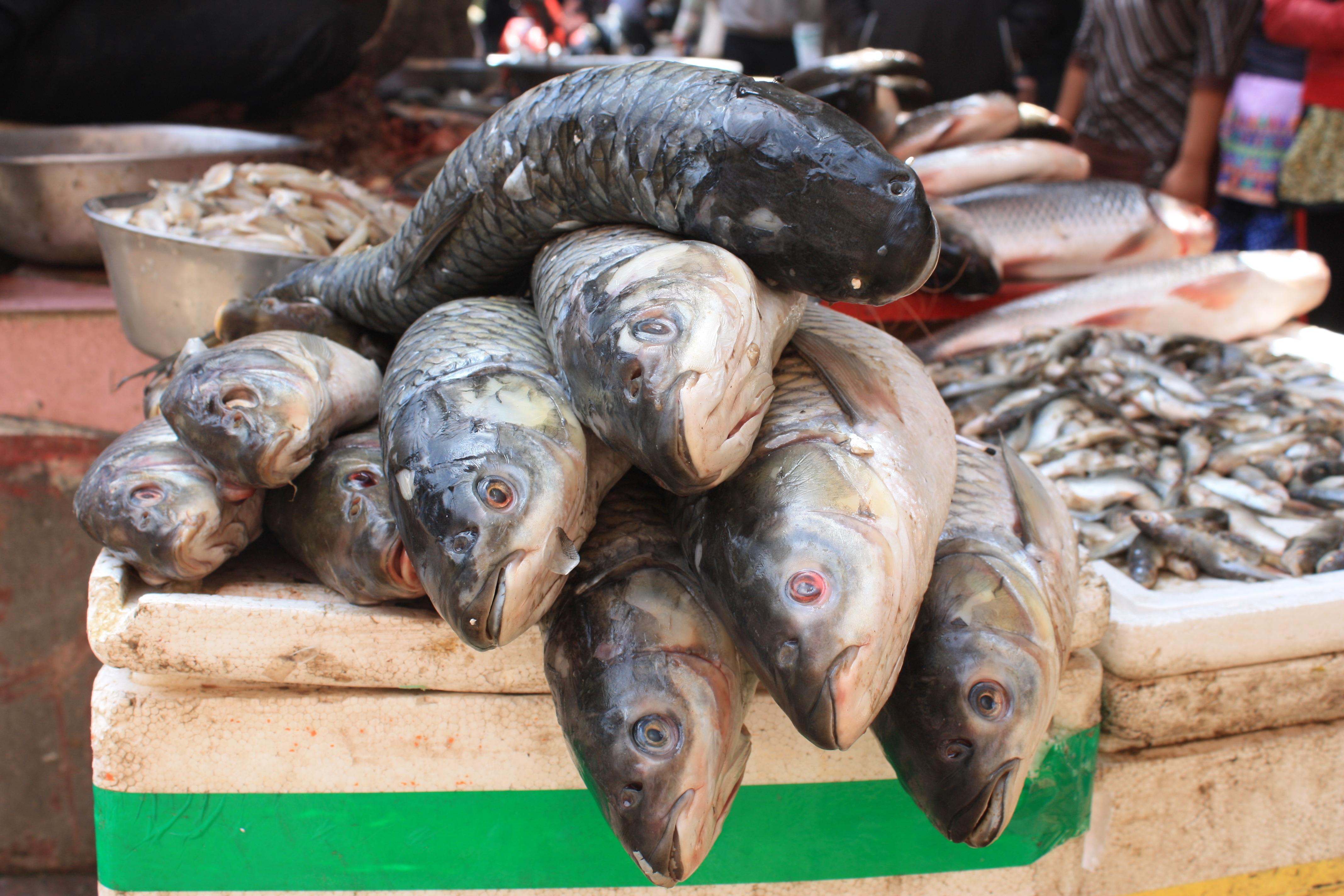 Images gratuites aliments marché poisson népal