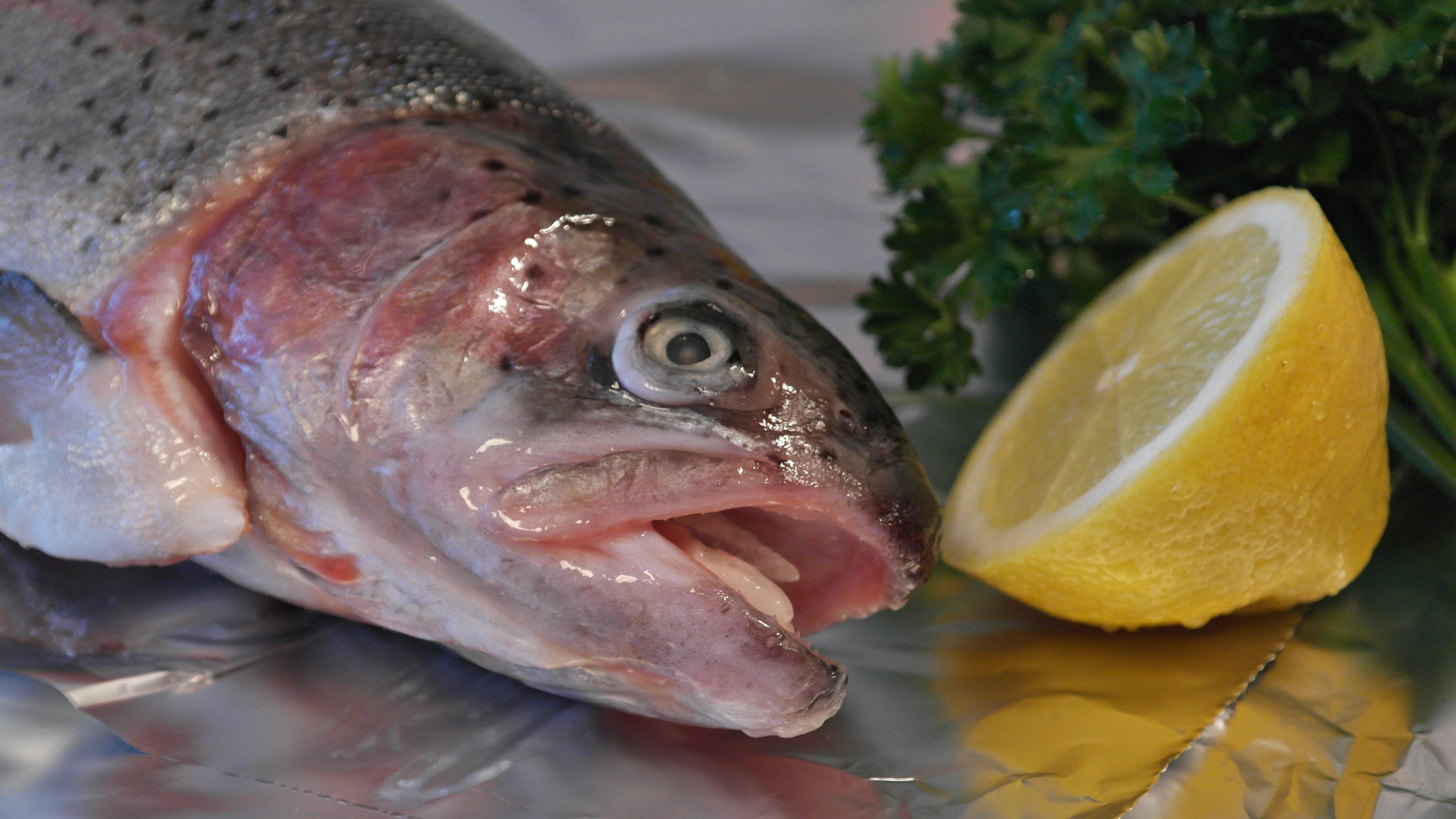 Fotos gratis comida perca mariscos comer lim n for Is tilapia a good fish to eat