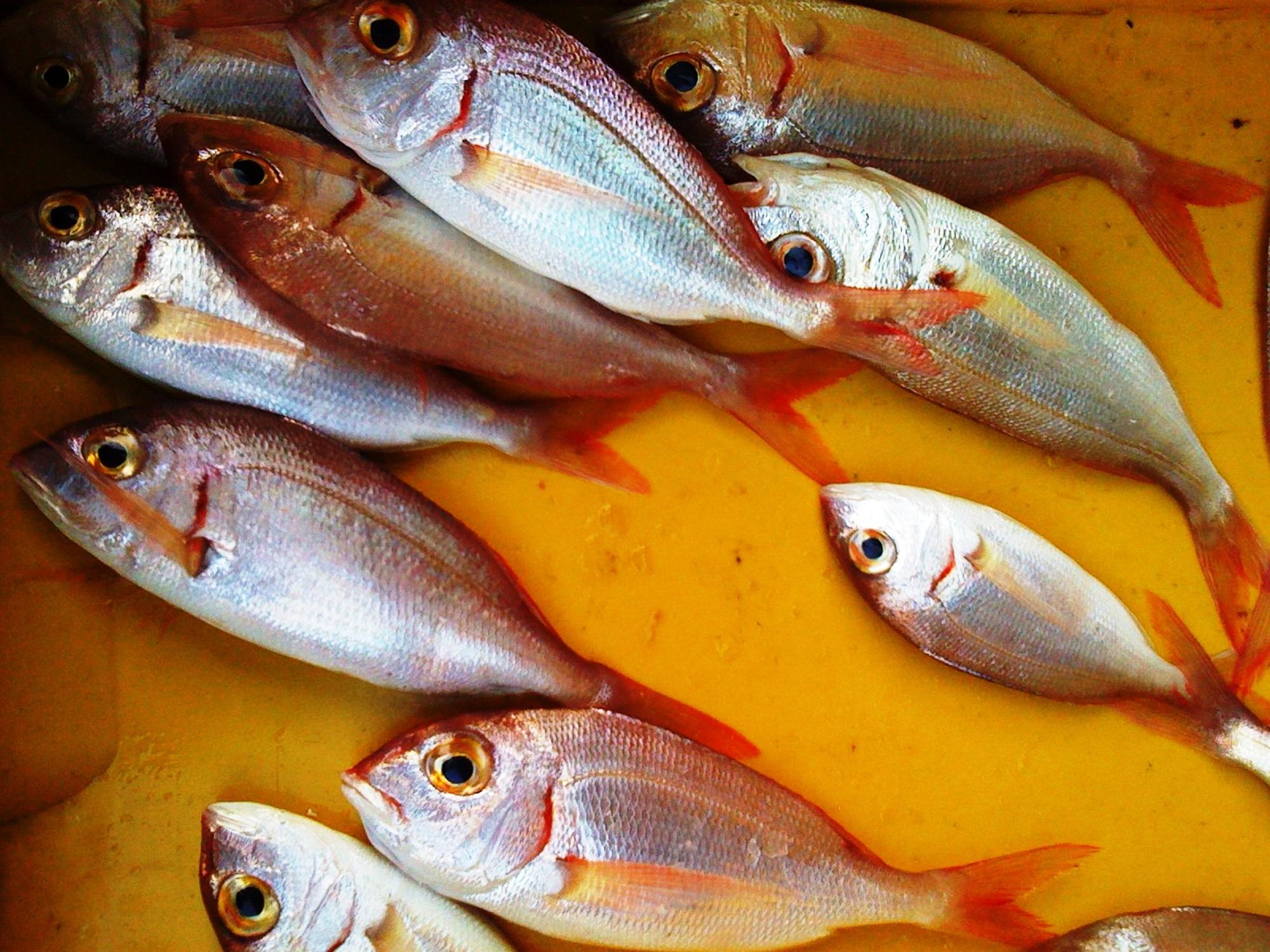 Fotoğraf Gıda Levrek Deniz ürünleri Italya Natürmort Boyama