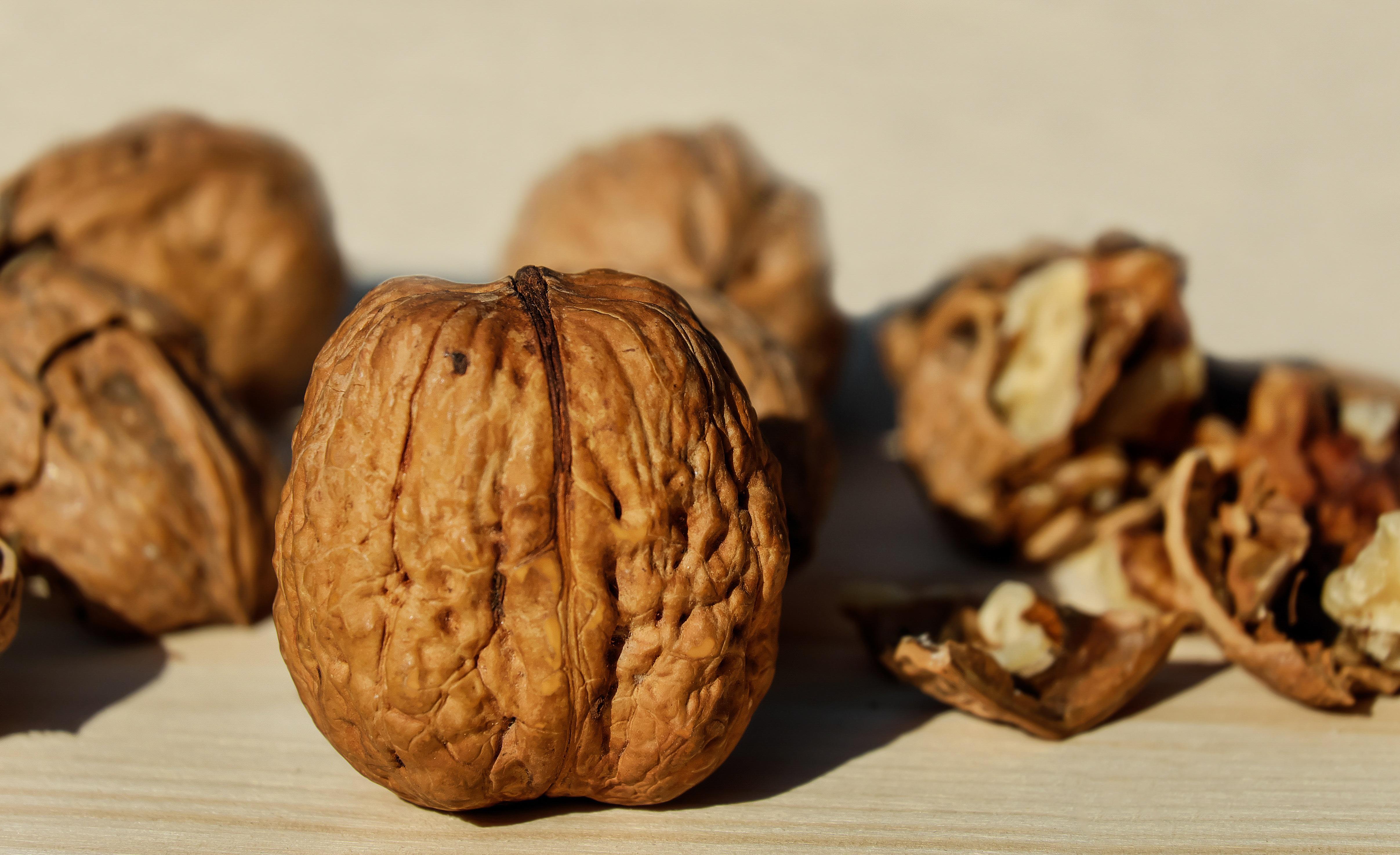 Kostenlose foto : Lebensmittel, produzieren, Herbst, braun, Nuss ...