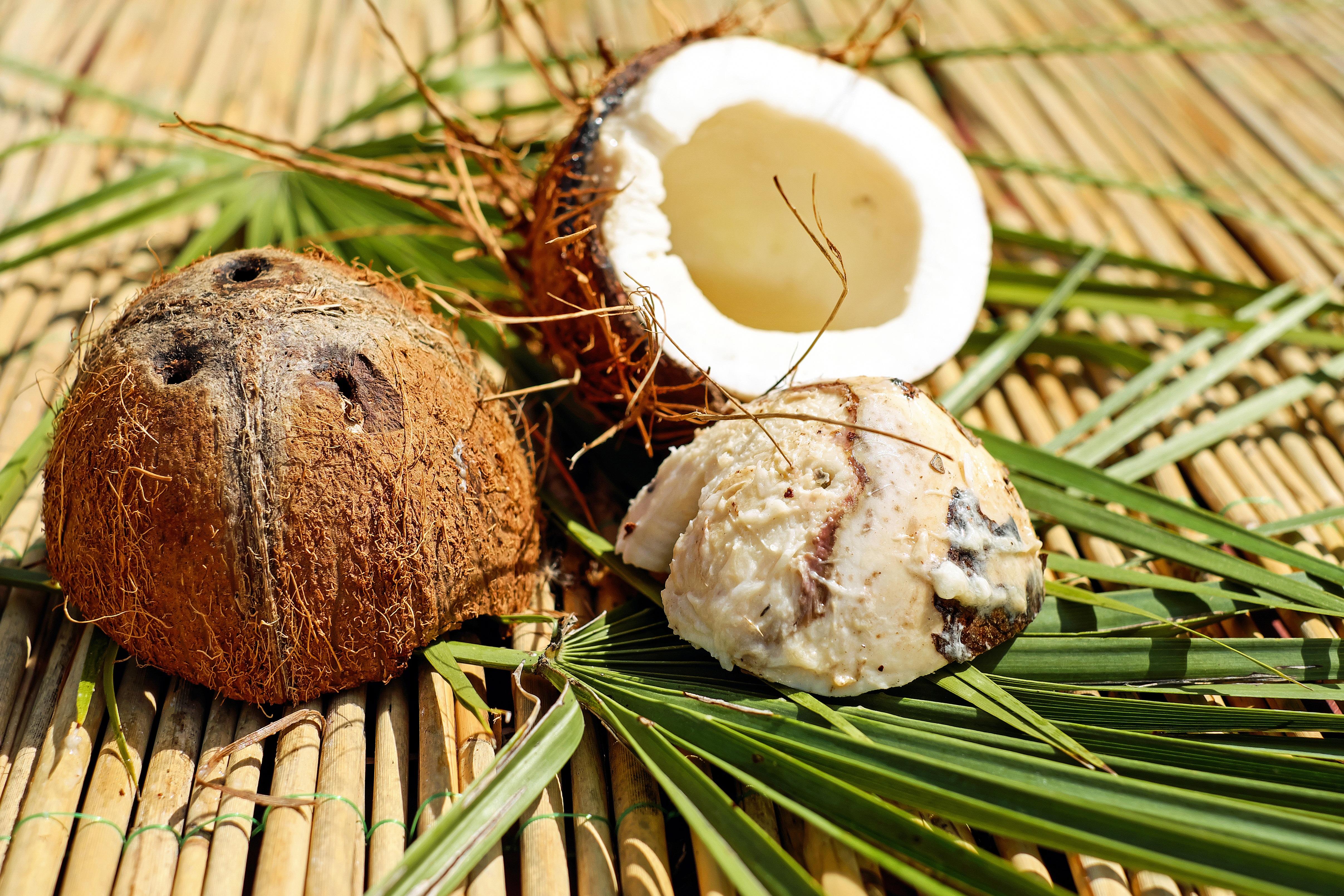 первых картинки раскол кокоса над полным циклом