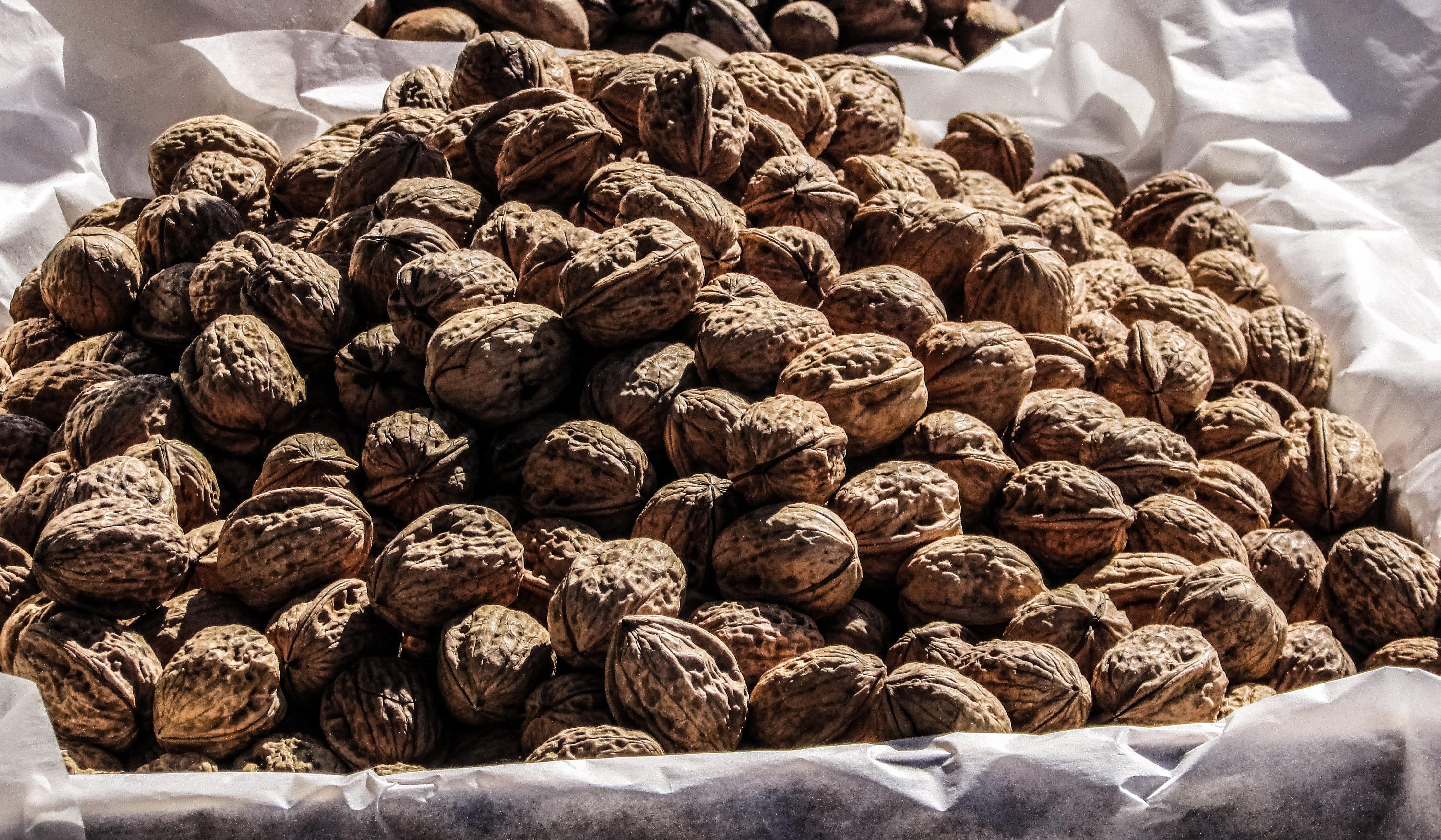 Фото всех орехов мира
