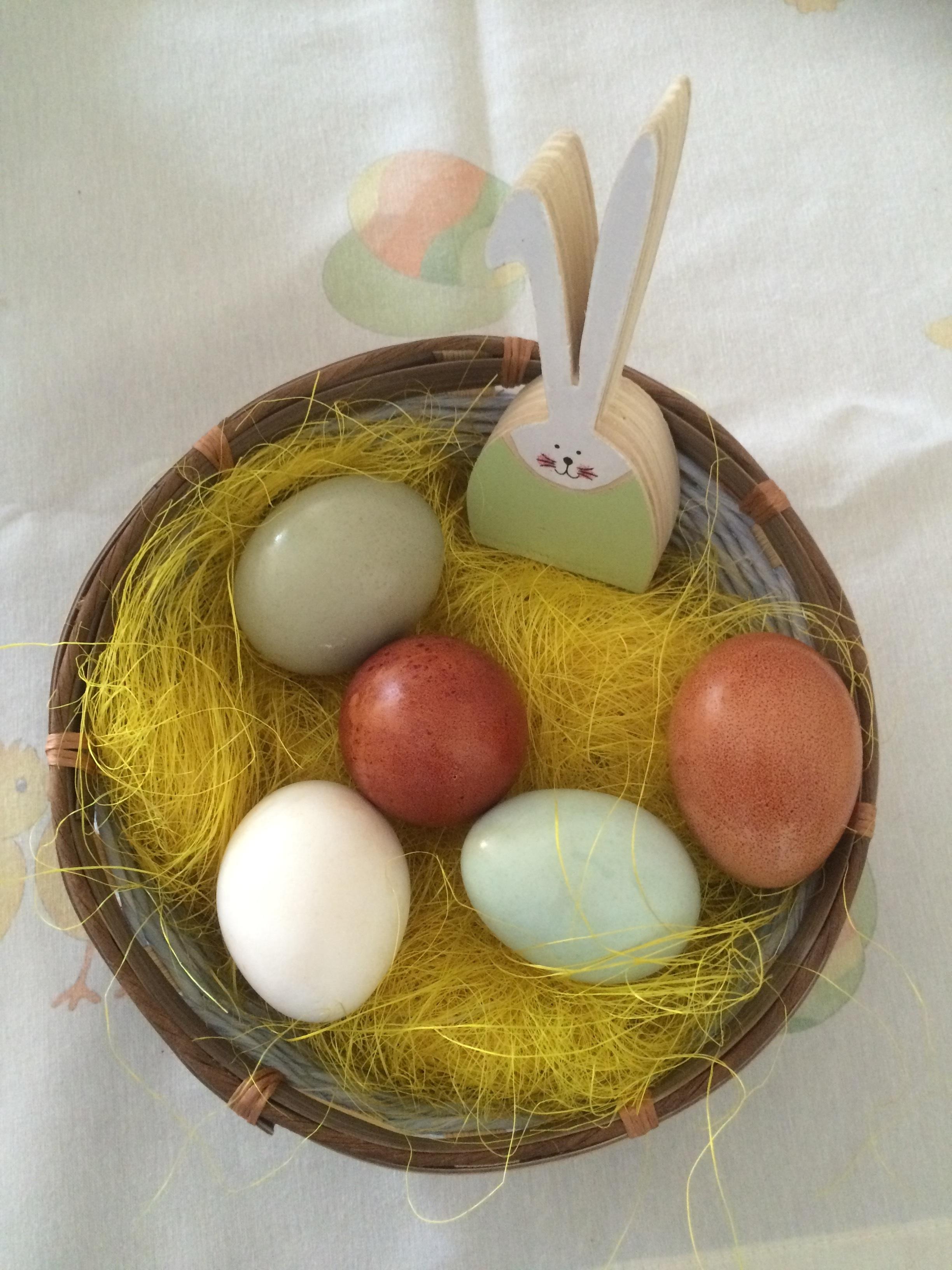 Kostenlose foto : Lebensmittel, Hase, Ei, Osterei, Ostern nest, Eier ...