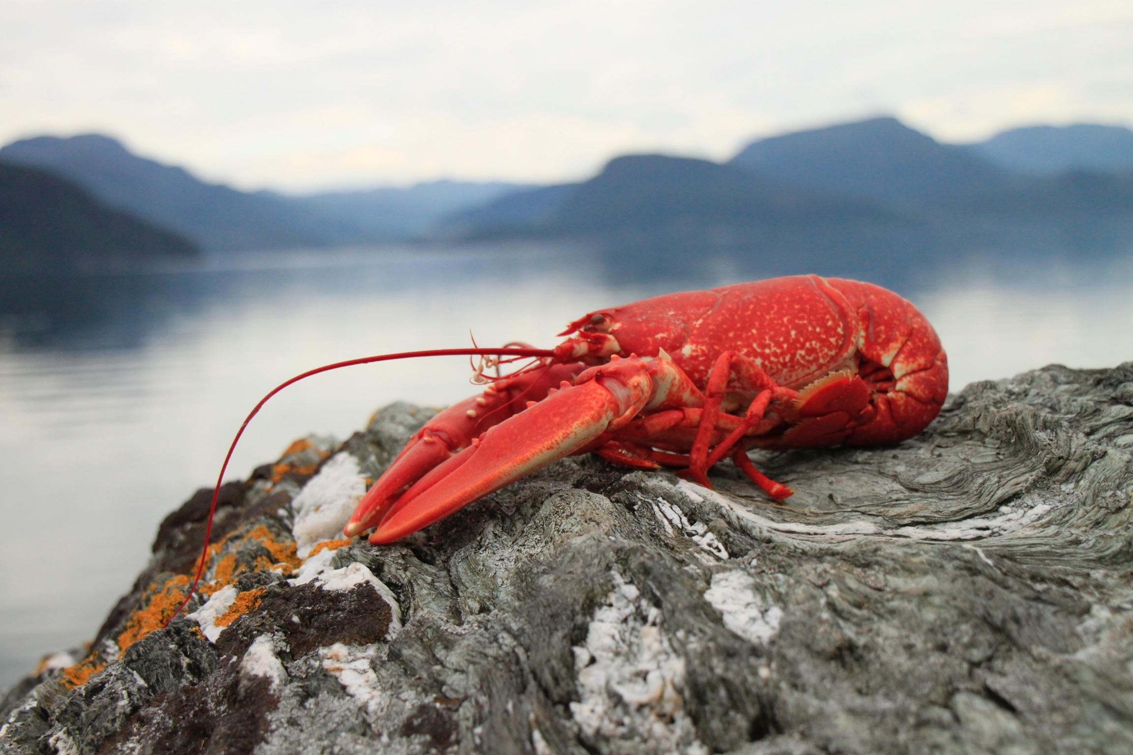Gambar Merah Makanan Laut Olahraga Ekstrim Fauna Kepiting