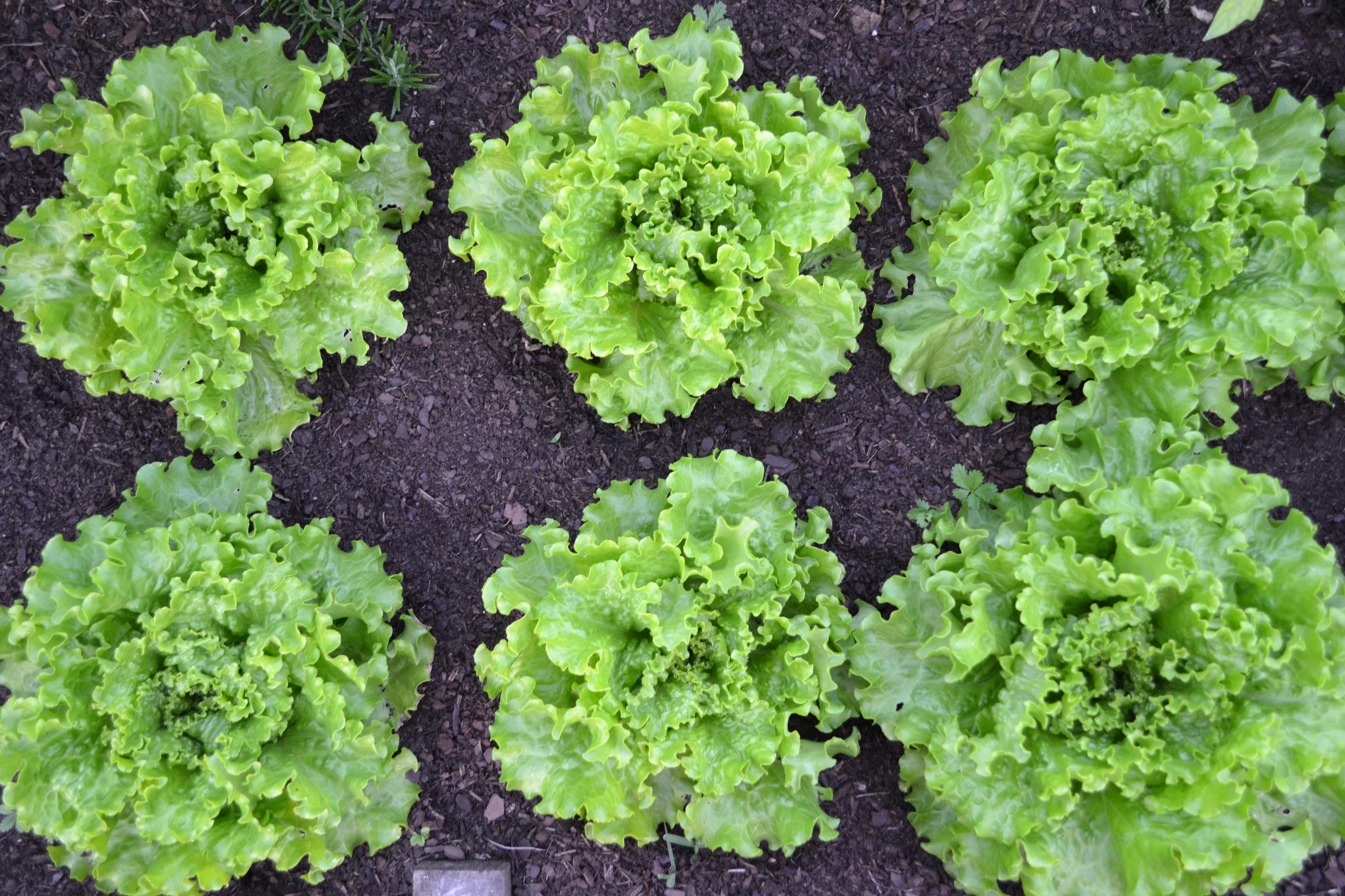 Рецепты салатов с фото в виде сердца лица порядке