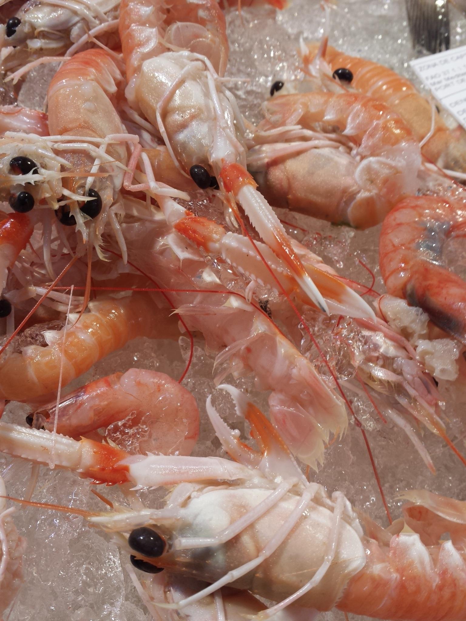 Gratis Afbeeldingen Zeevruchten Vis Ongewerveld Garnaal