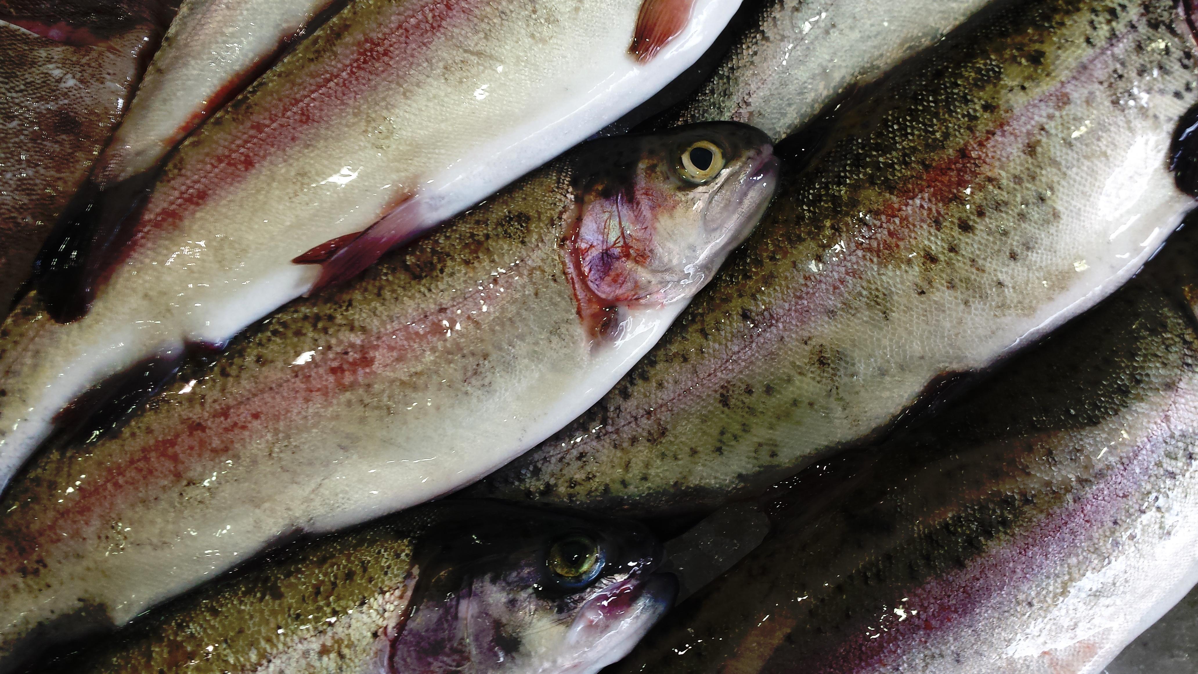 Free Images Food Seafood Sardine Milkfish Herring Cod