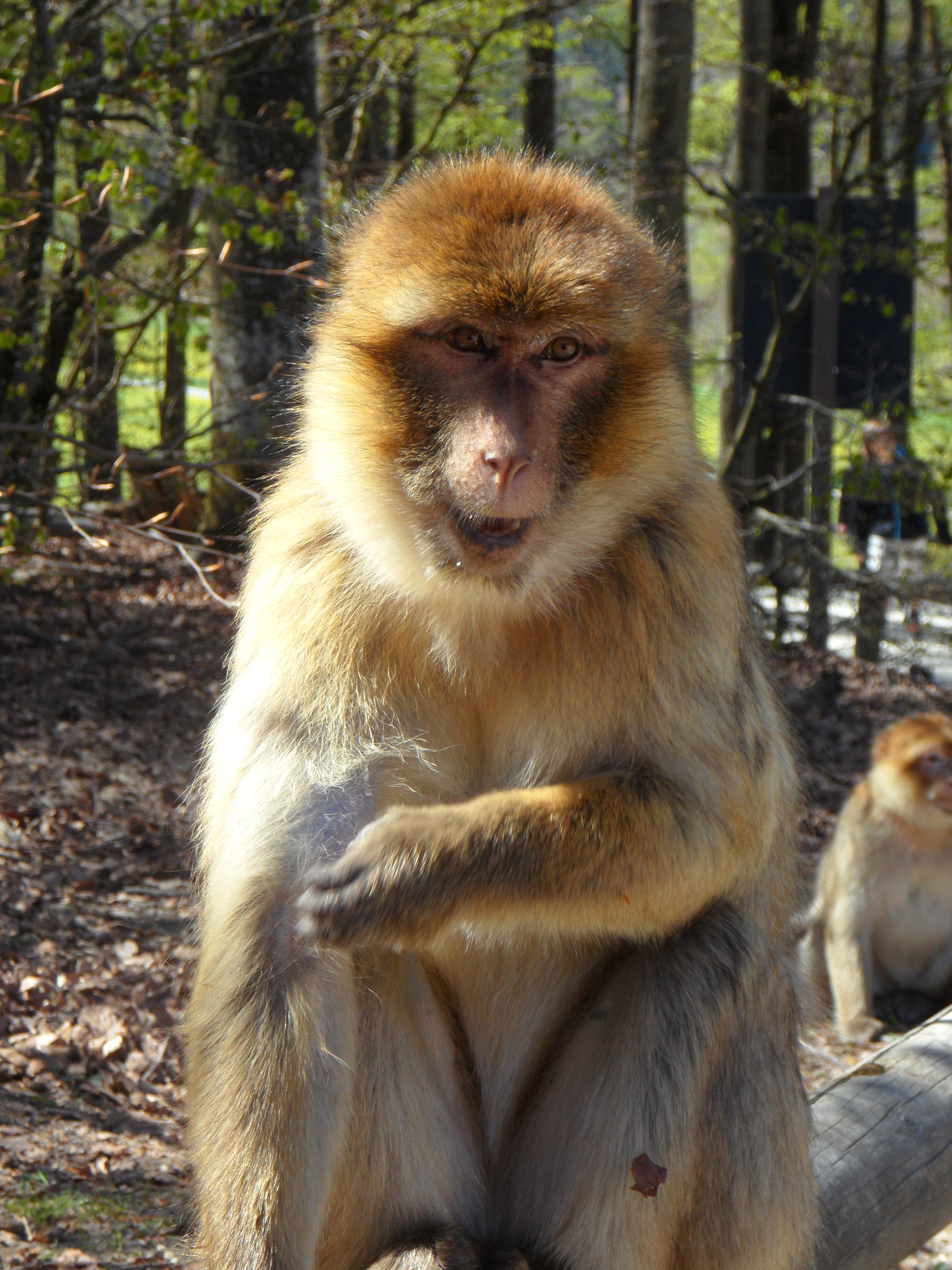 Download 99+ Gambar Monyet Wanita Paling Baru Gratis