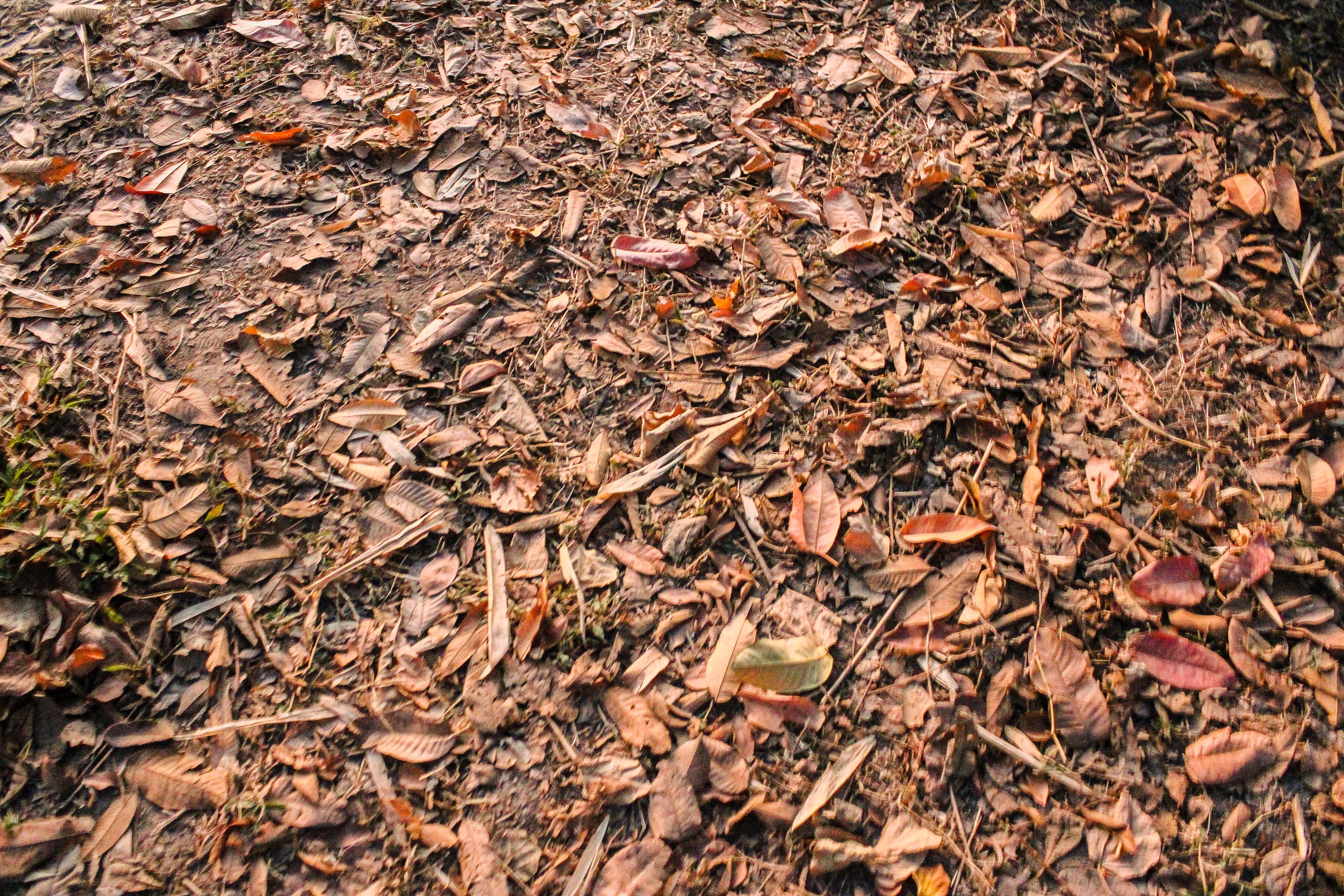 Compost De Feuilles D Érable images gratuites : forêt, beauté, couleur, concept, rural