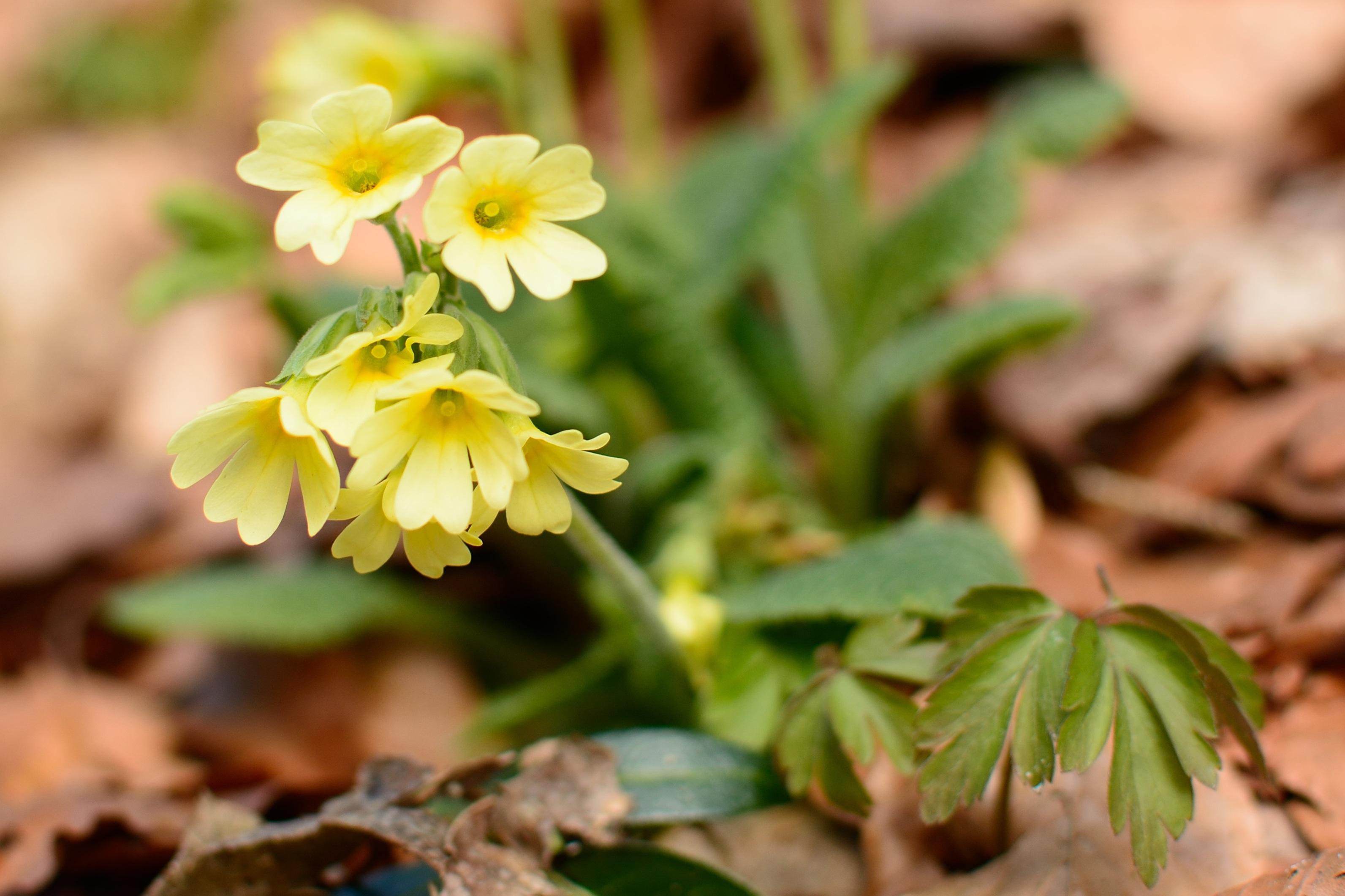 используются для лесные первоцветы фото с названиями фотографий пенокартоне