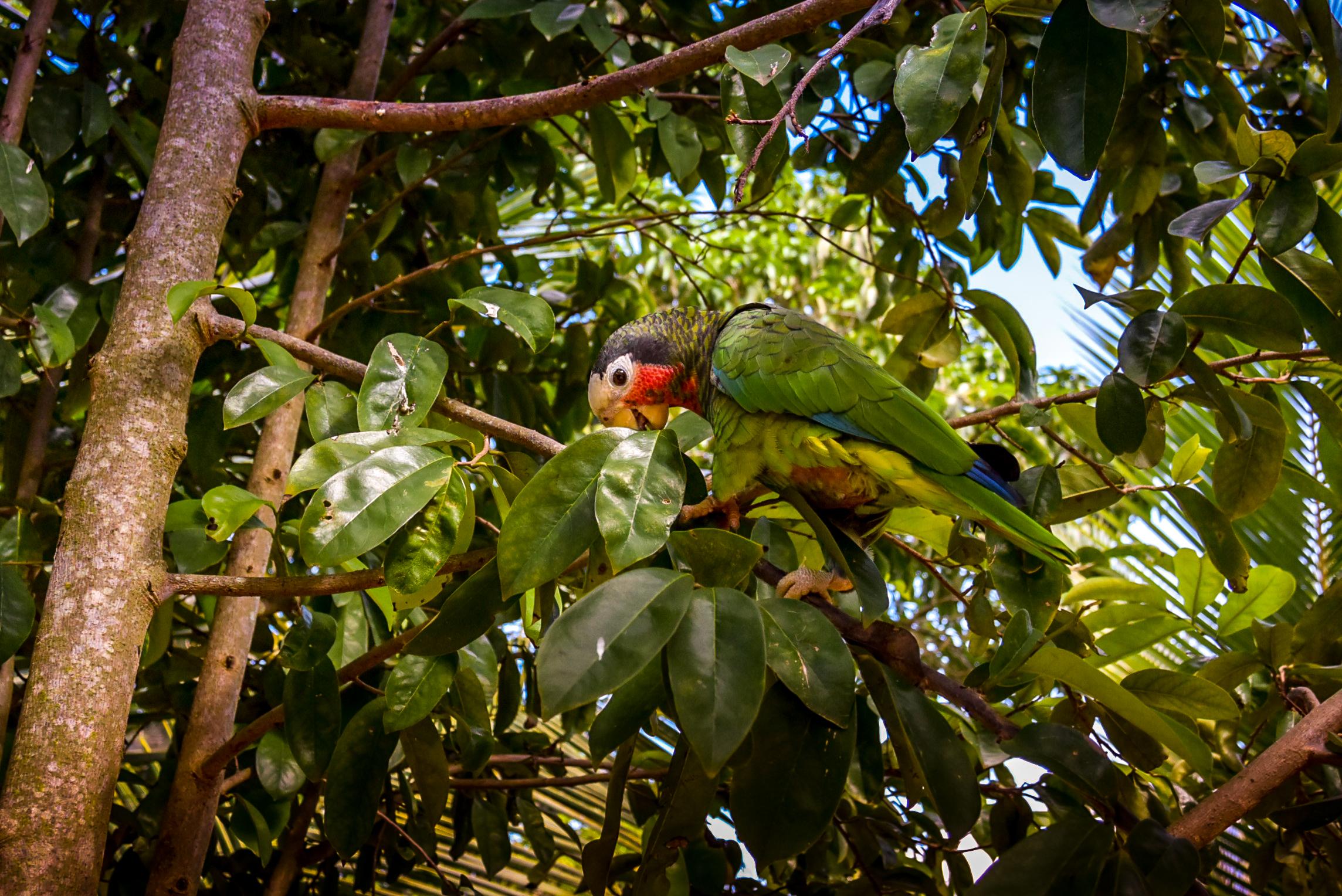 Parrot Jungle And Gardens Tickets Garden Ftempo