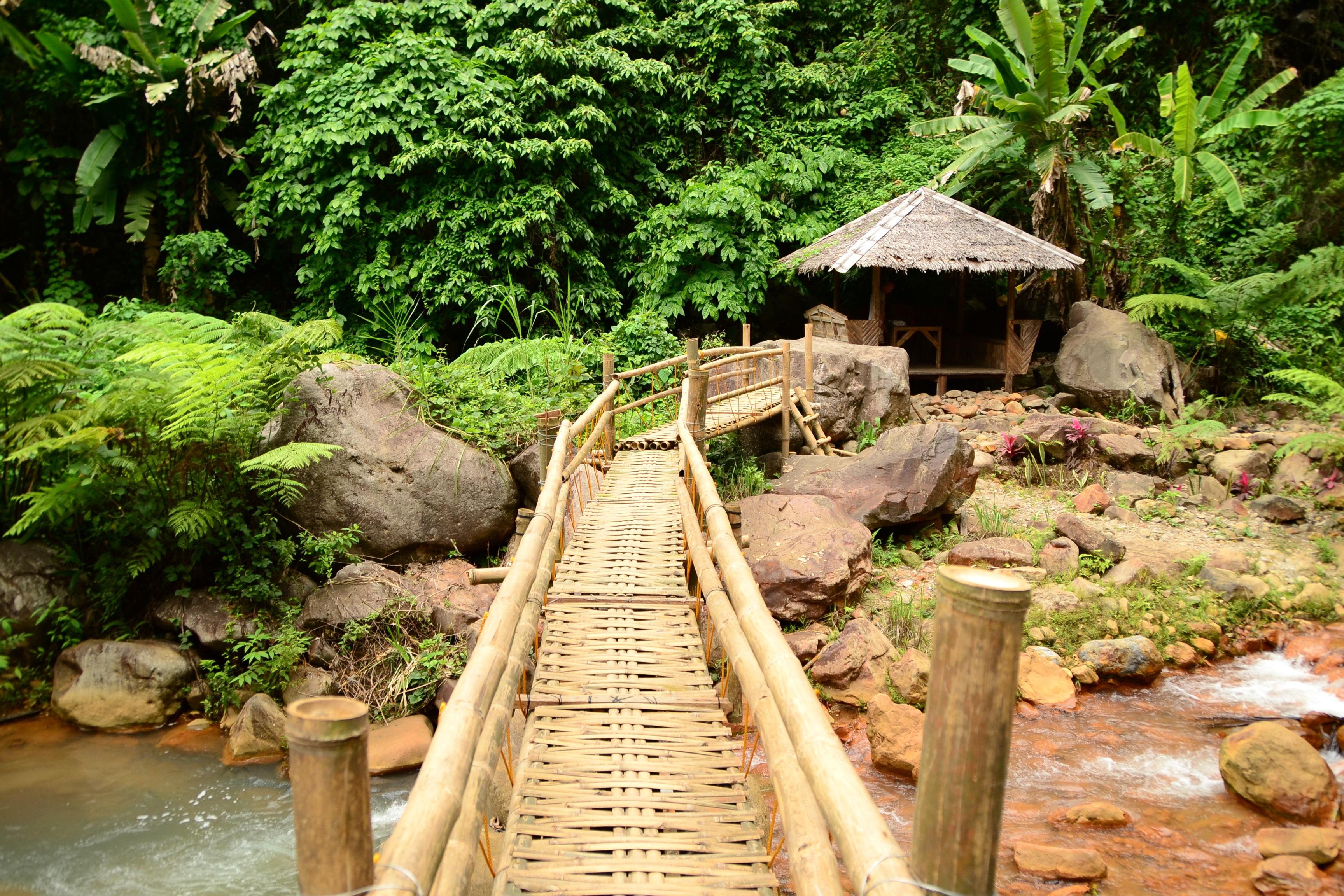 Fotos gratis bosque puente cruce selva jard n bamb for Jardin bambu