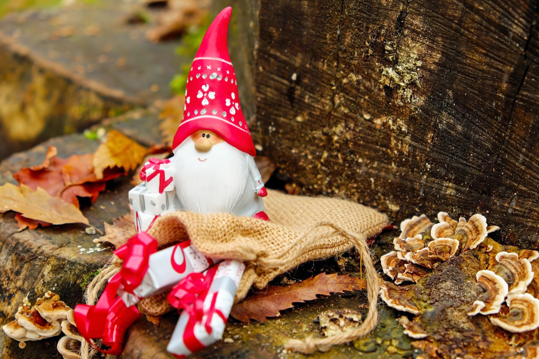 Kostenlose foto : Wald, kalt, Log, Herbst, Urlaub, Weihnachten ...