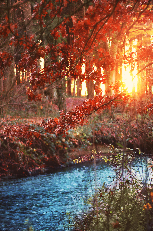 無料画像 森林 クリーク 茂み 太陽の光 夜の気分 輝き 照ら