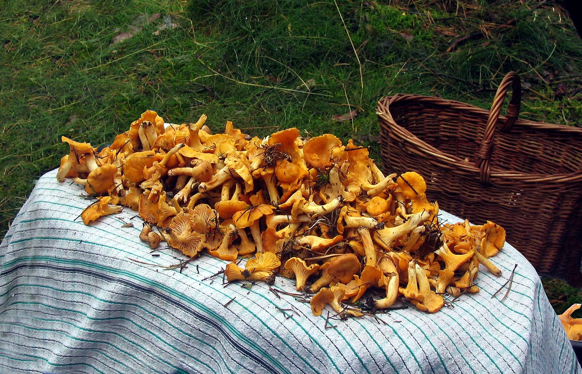 сборник грибов с картинками