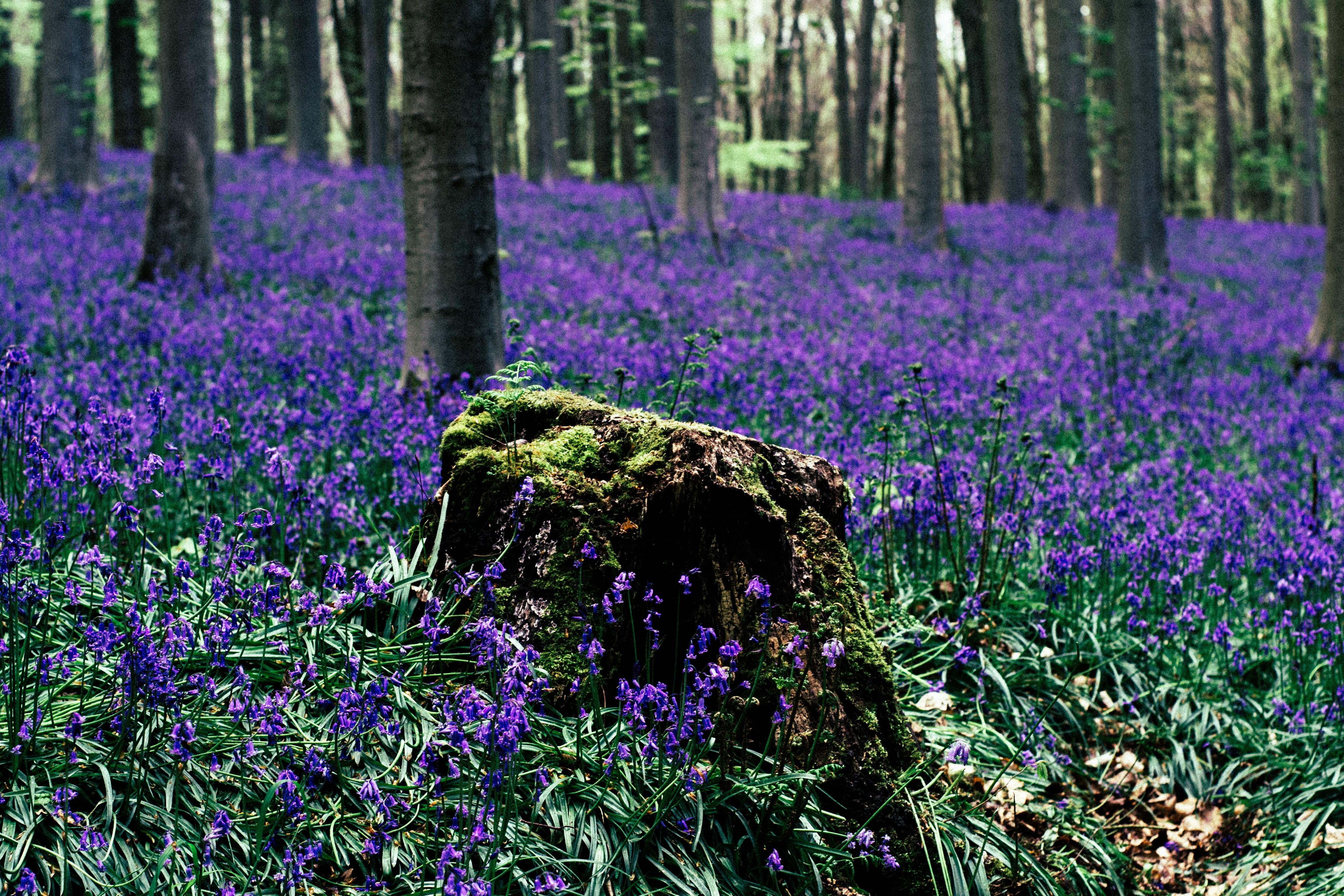 основных лесные цветы картинки и названия цветов узнаете том
