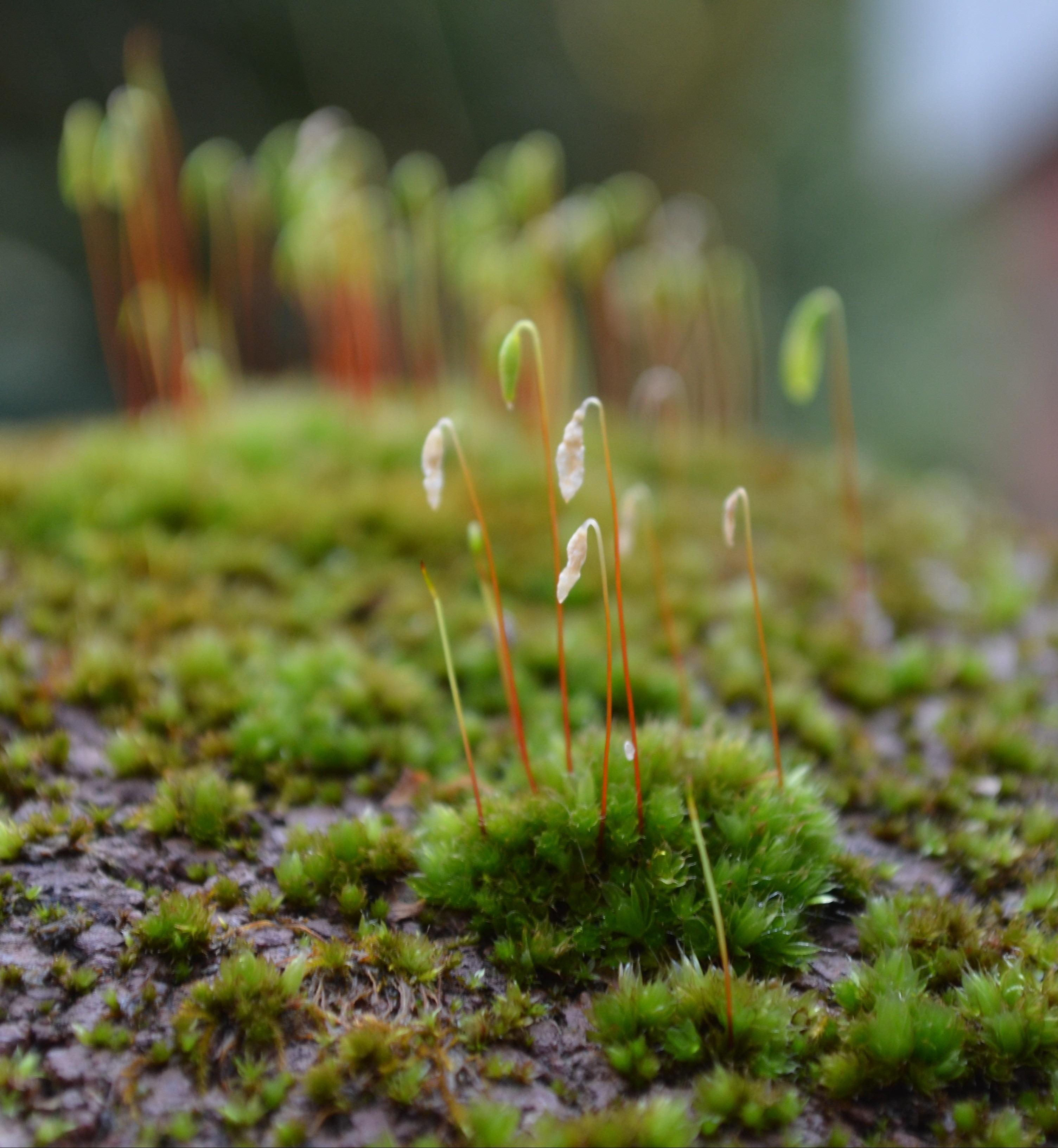 Images gratuites for t herbe plante feuille fleur for Plante herbe haute