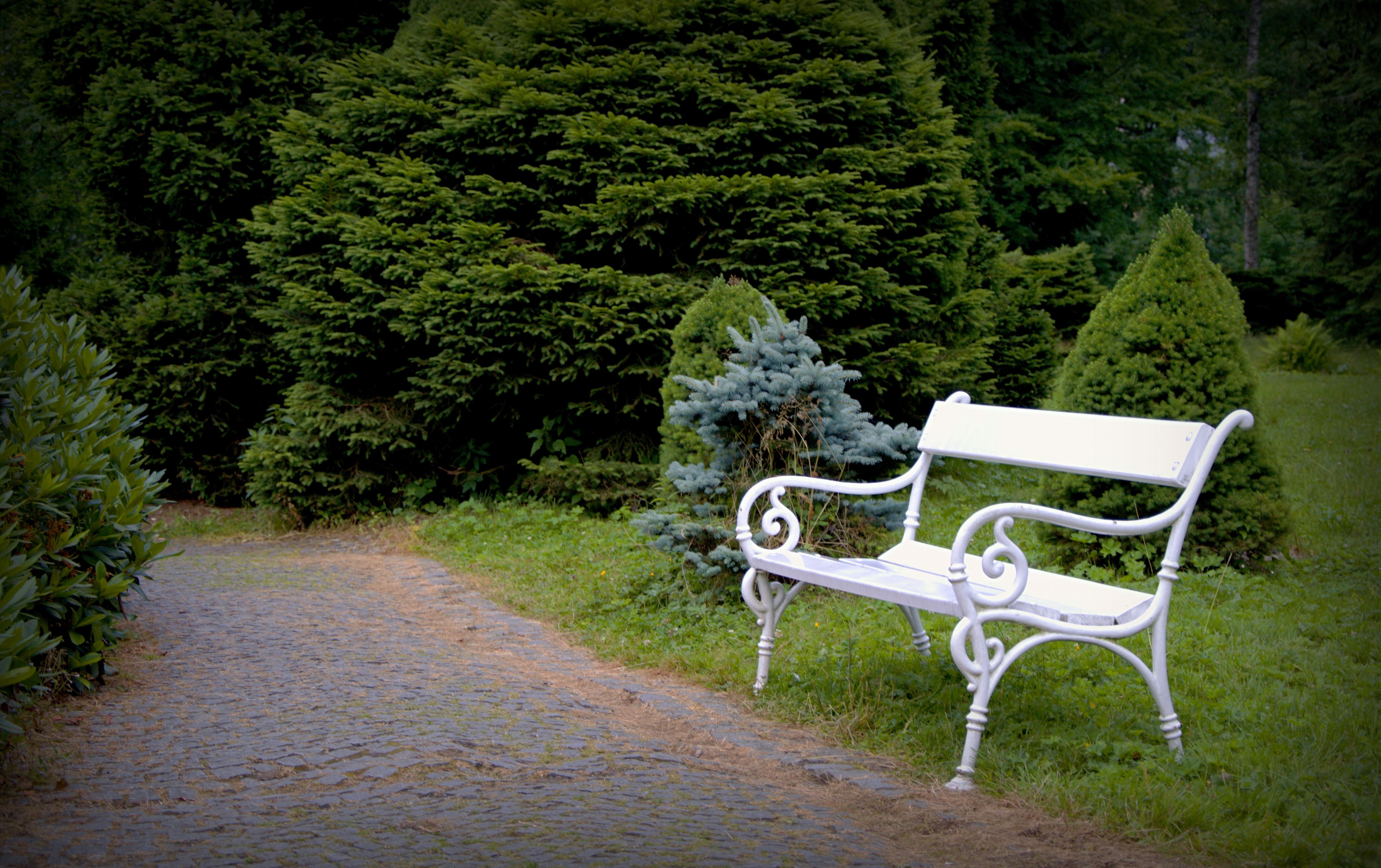Fotos gratis : bosque, césped, sendero, blanco, banco, pavimento ...