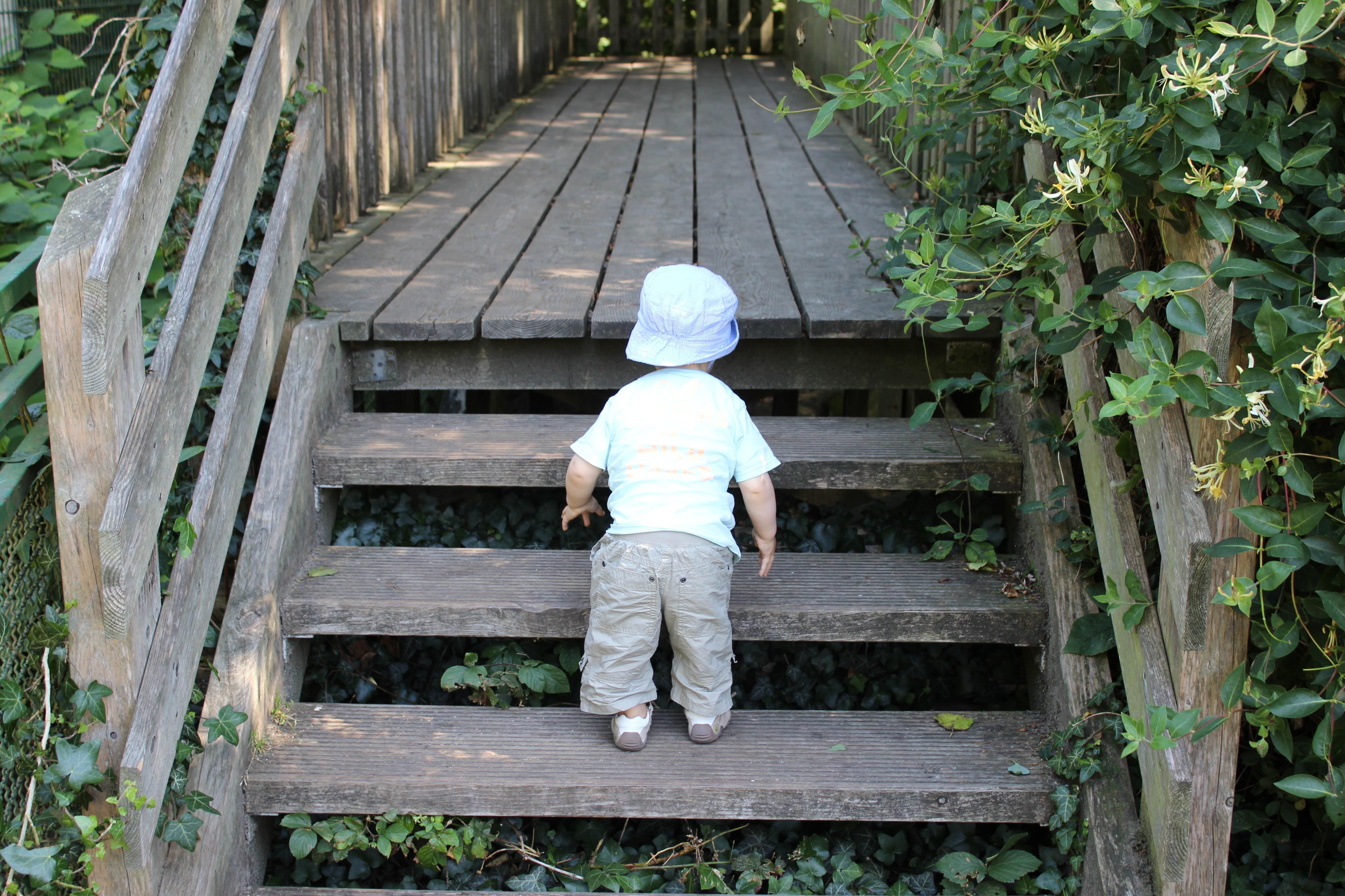 Gratis afbeeldingen : bos oerwoud tuin kinderen trap jongetje