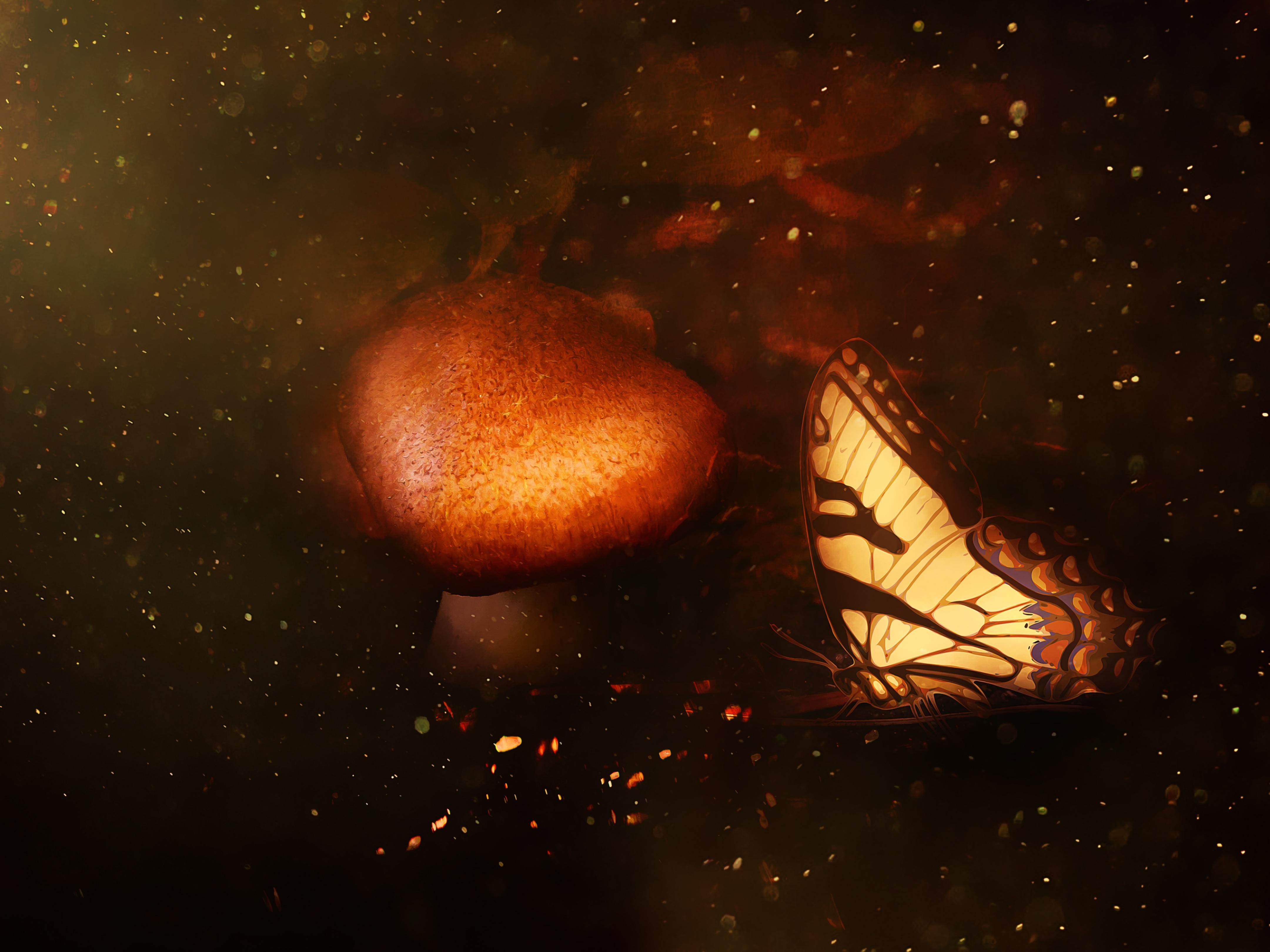 Fotoğraf Orman Gece Güneş ışığı Star Boşluk Kahverengi