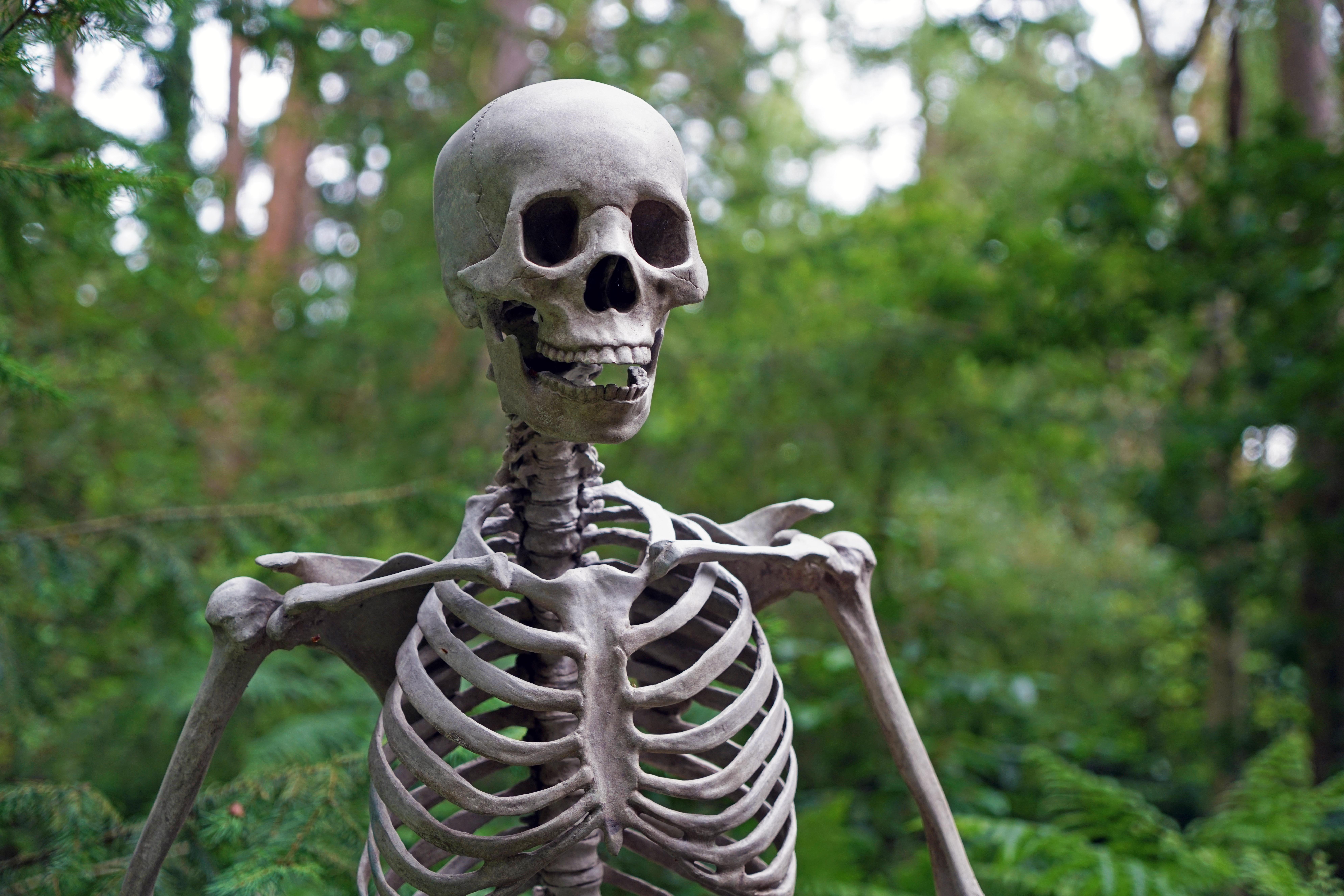Началом, картинка смешного скелета