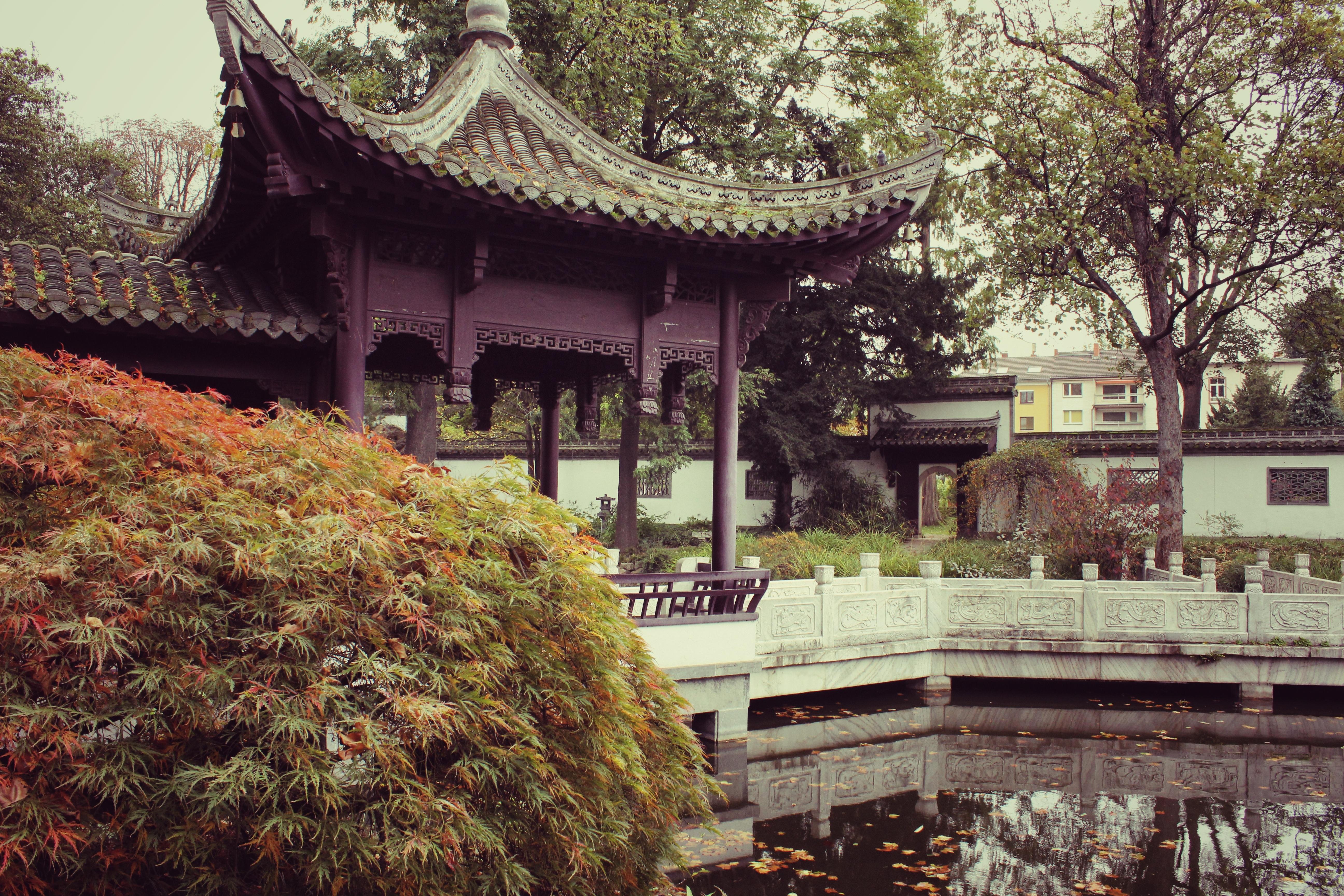 Fotos gratis bosque al aire libre rock flor edificio for Jardin chino
