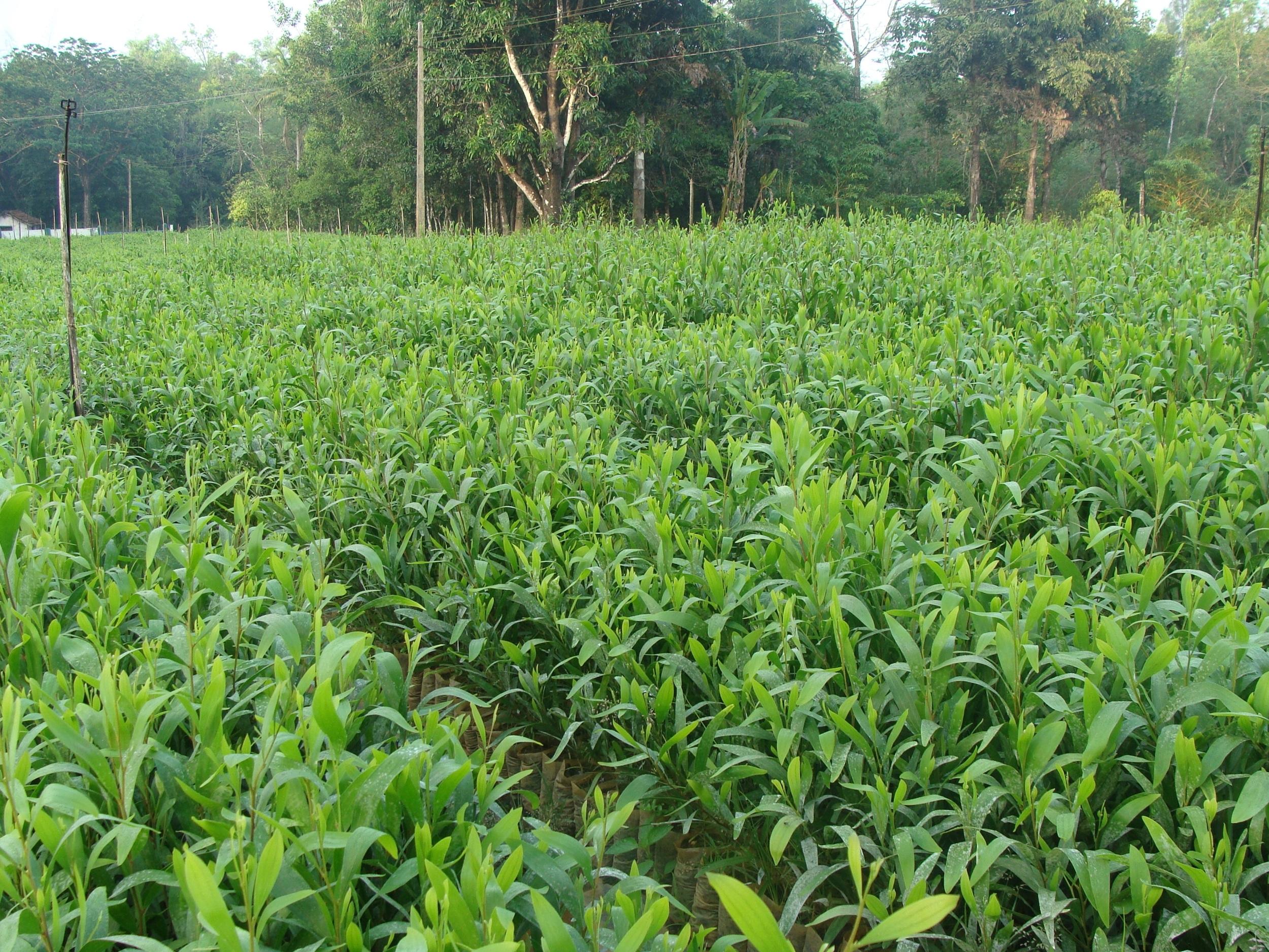Plantation Food Service