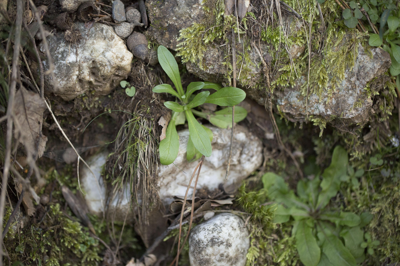 Images gratuites plante feuille fleur faune l 39 europe for Plante jungle