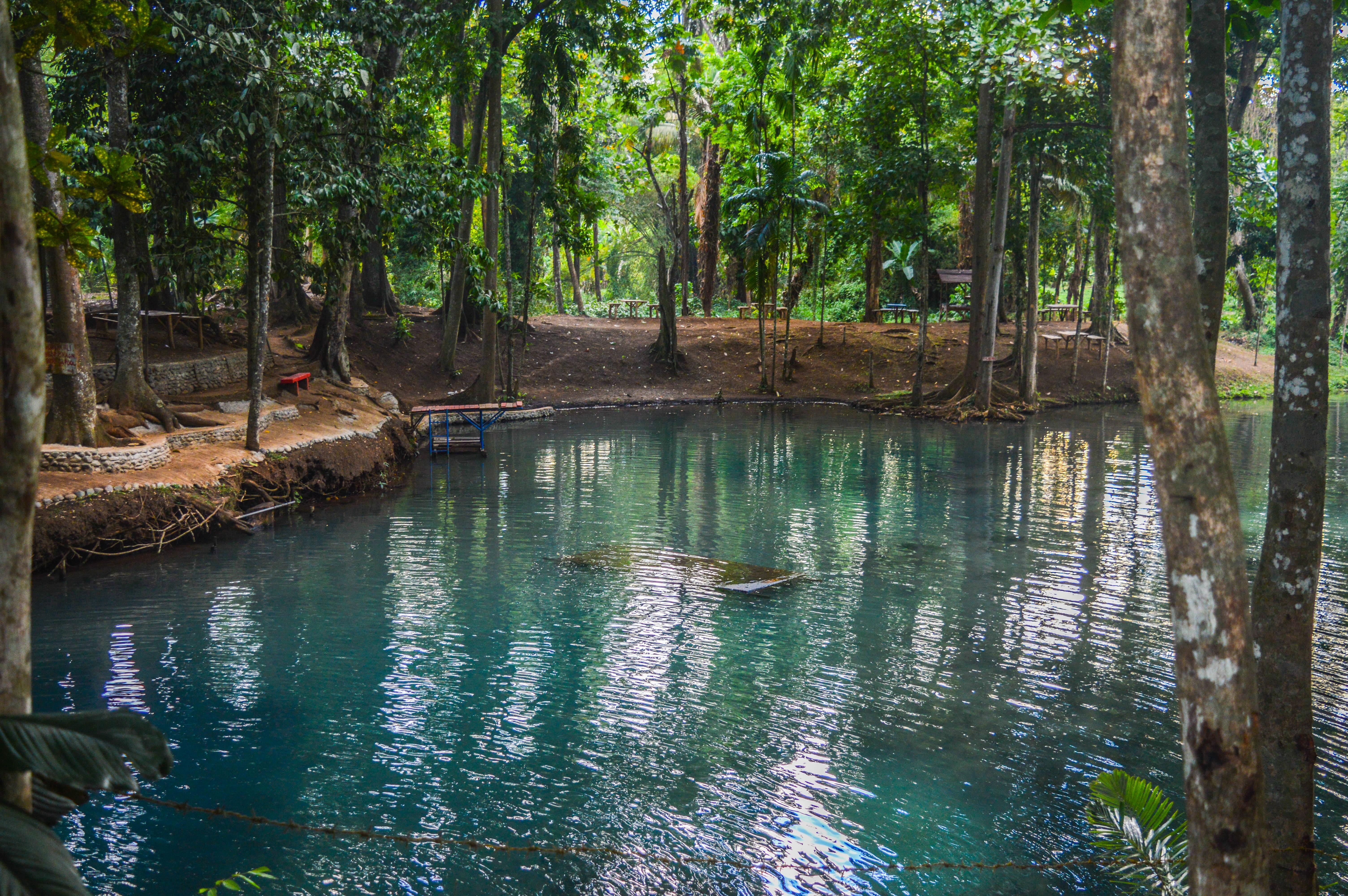 Fotos gratis bosque pantano selva cuerpo de agua for Estanque natural