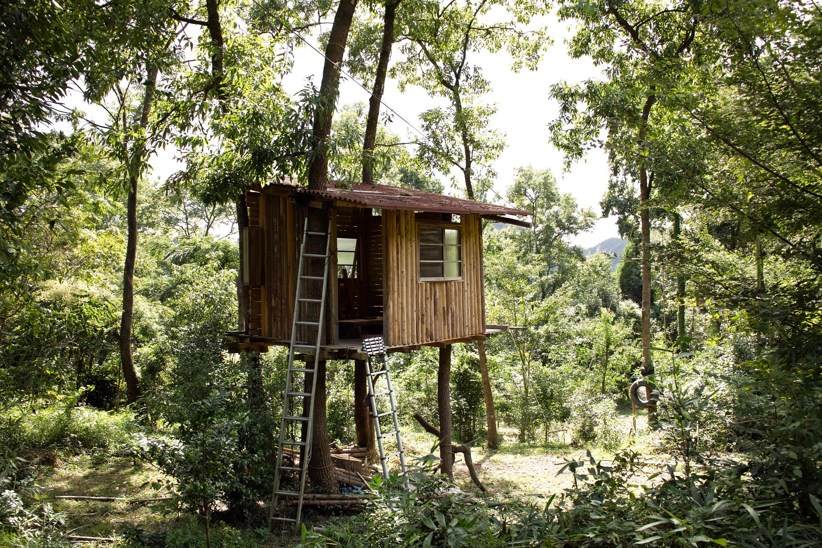 Fotos Gratis Bosque Sendero Choza Selva Cabana De Madera Casa - Cabaas-de-madera-en-arboles