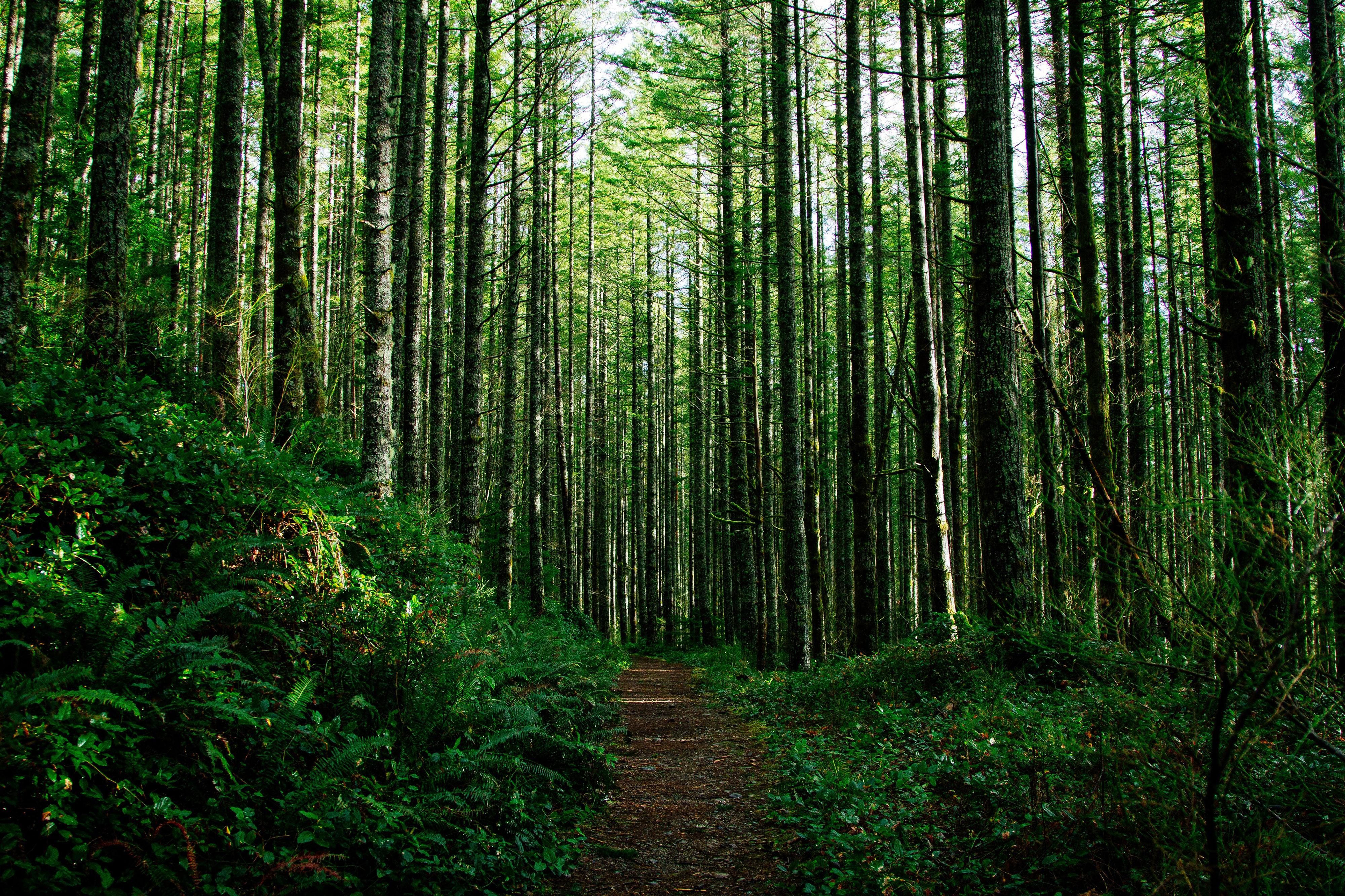 лучшие фотографии леса нет рубцов