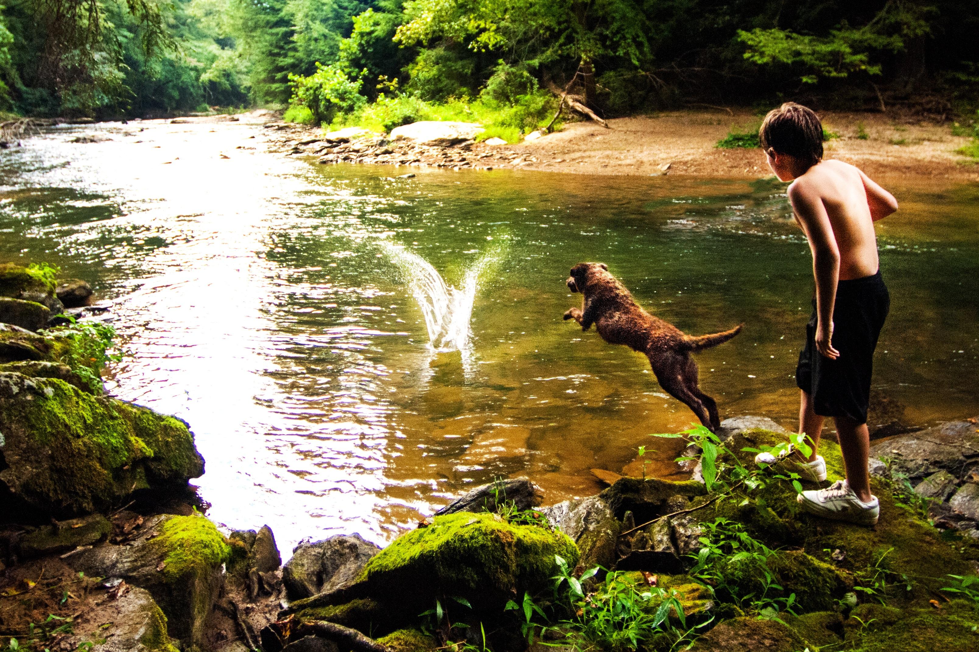 Images gratuites cascade r gion sauvage chien rivi re for Cascada par