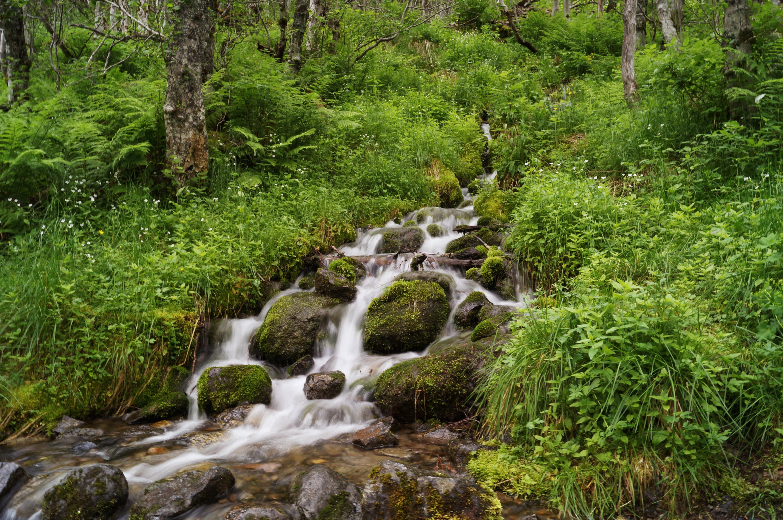 барной фото лесных ручьев продажам телефон
