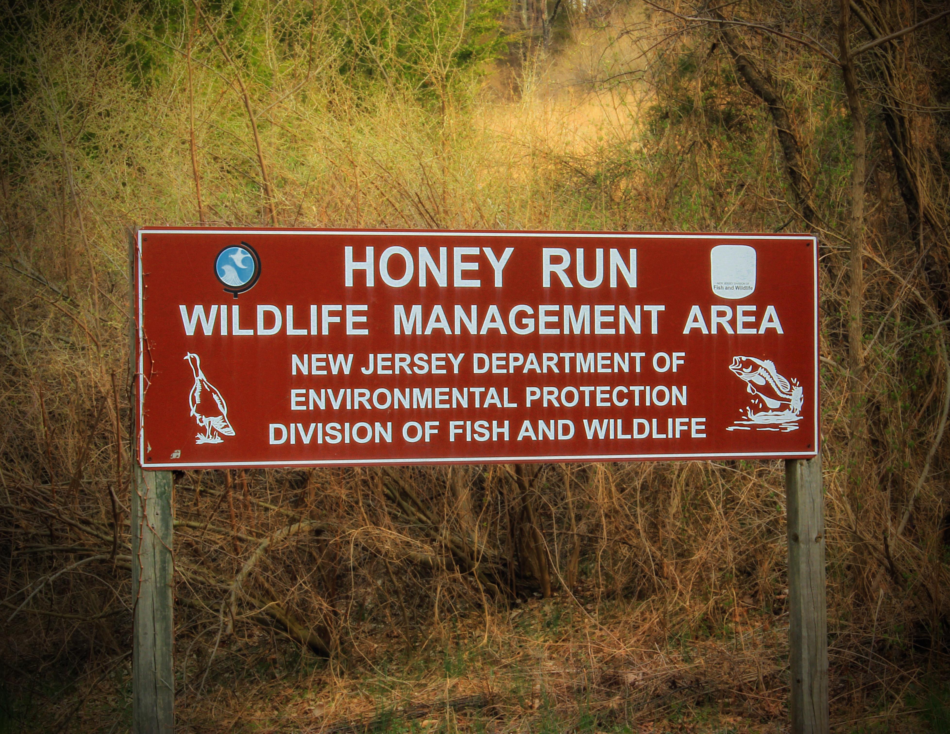 Картинки дорожный знак лес