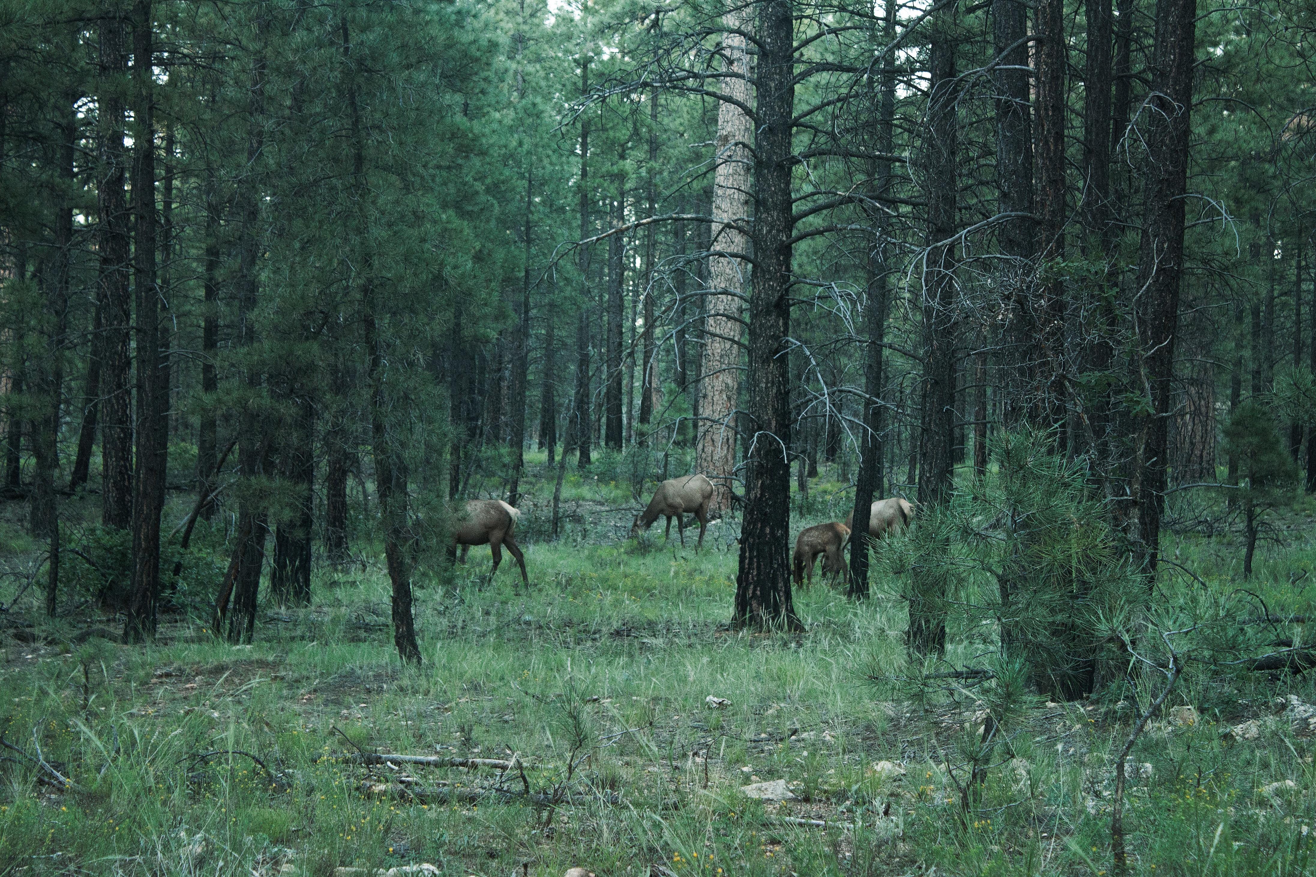 каждой фото животных широколиственных лесов втором фото филейная