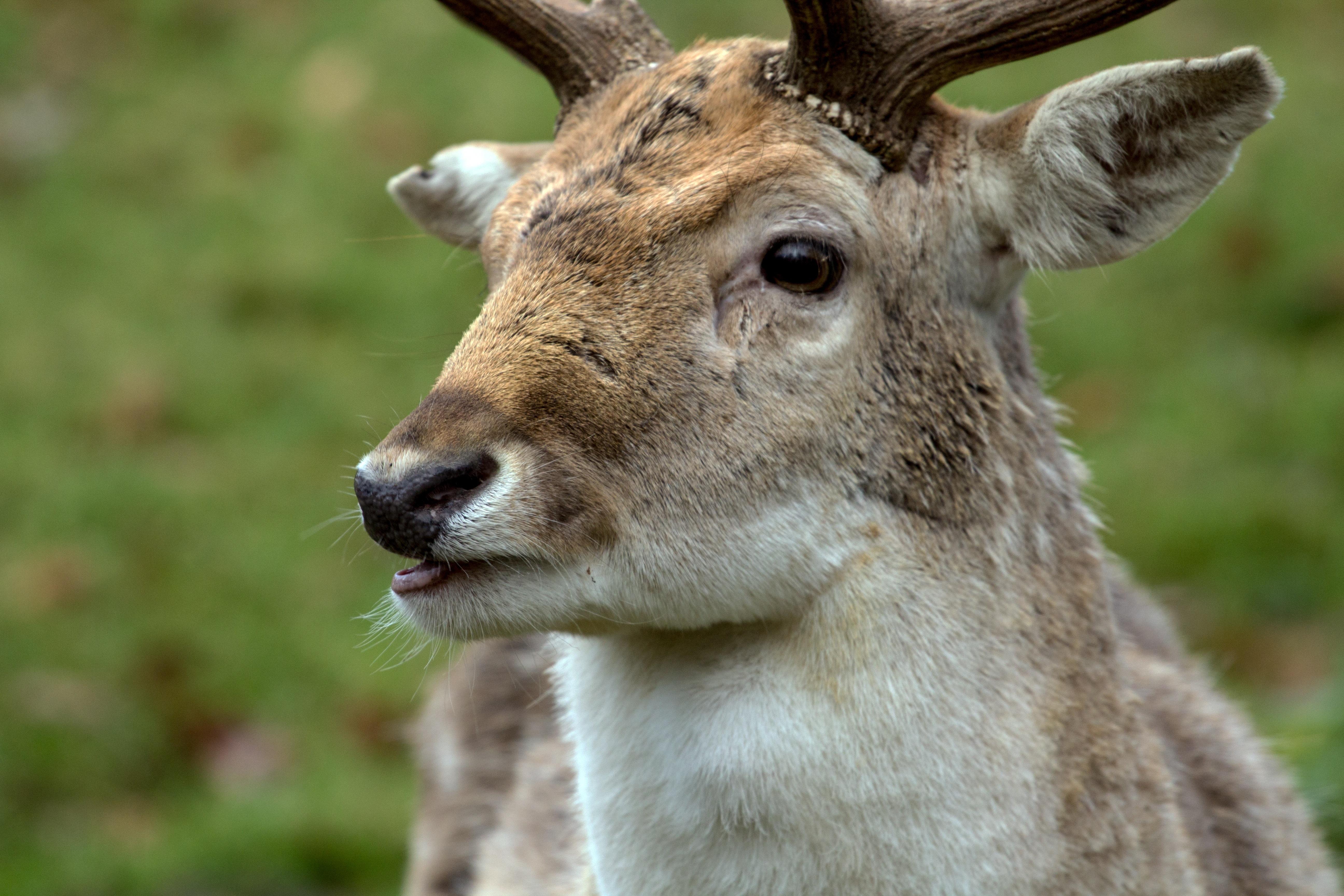 5800 Gambar Binatang Bertulang Belakang Gratis