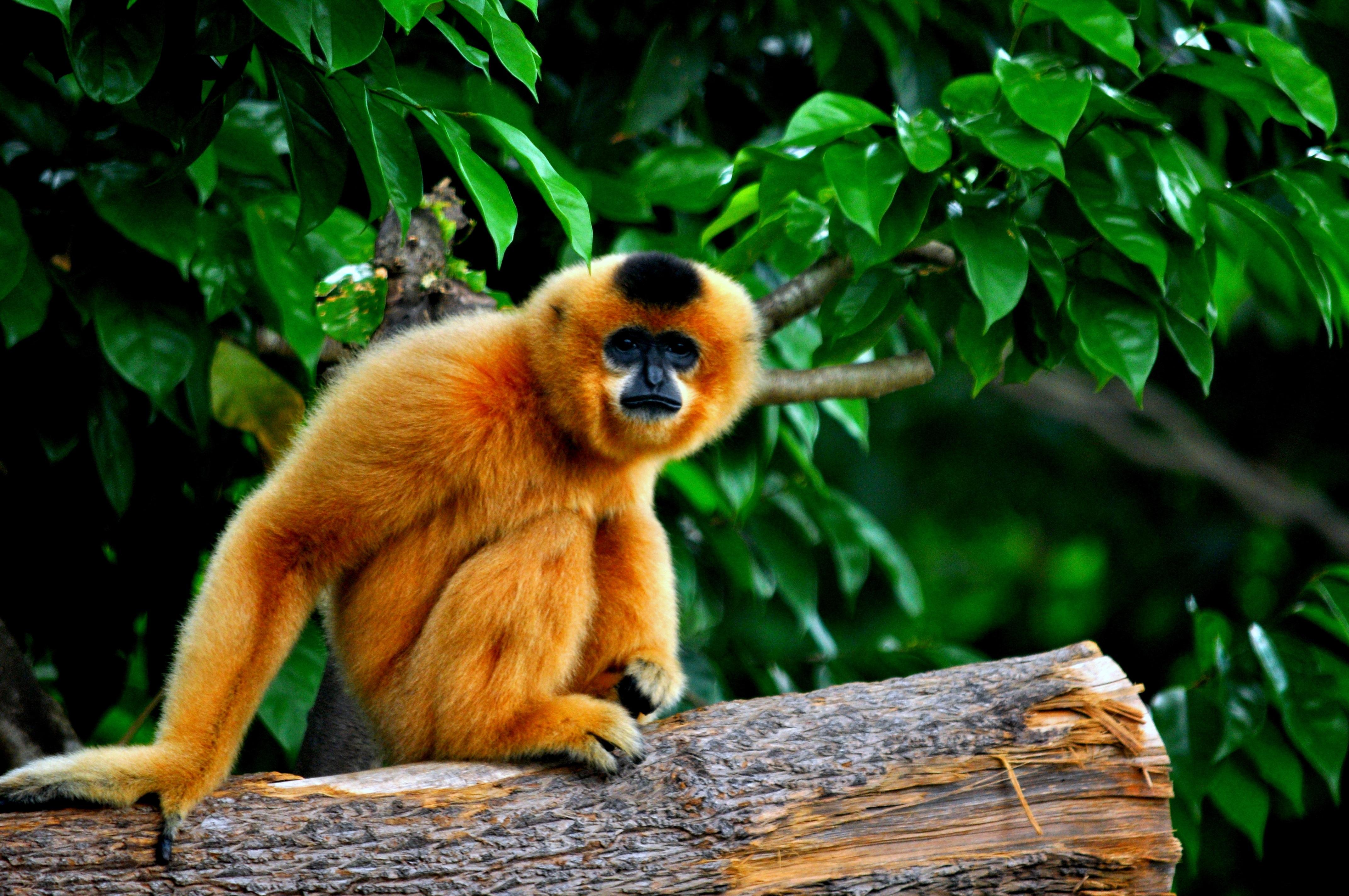 обезьянки в джунглях картинка балаяж