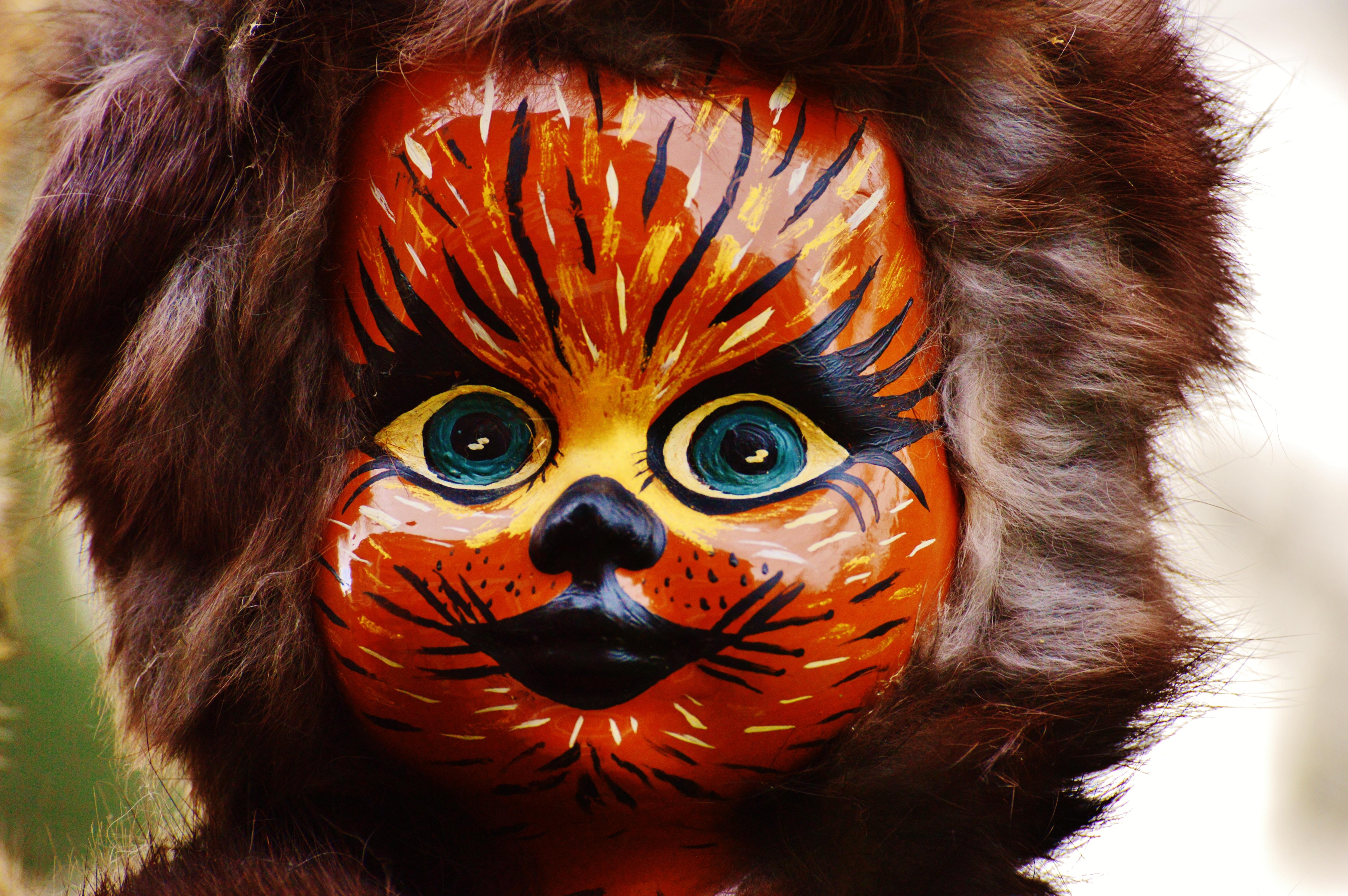 Fotograf Kurk Karnaval Kedi Renk Aslan Boyama Kutlamak