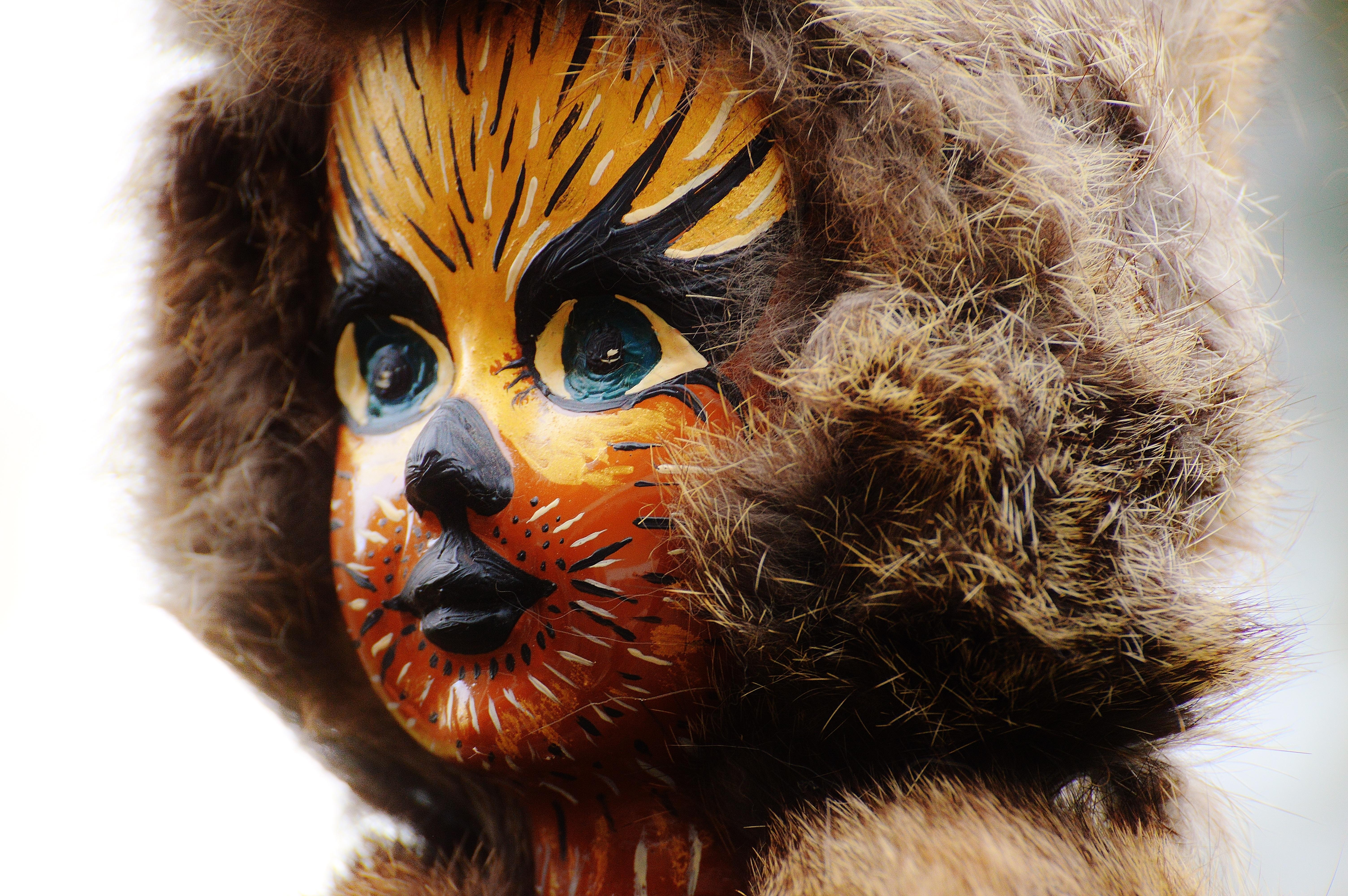 Fotoğraf Kürk Karnaval Kedi Renk Aslan Boyama Kutlamak