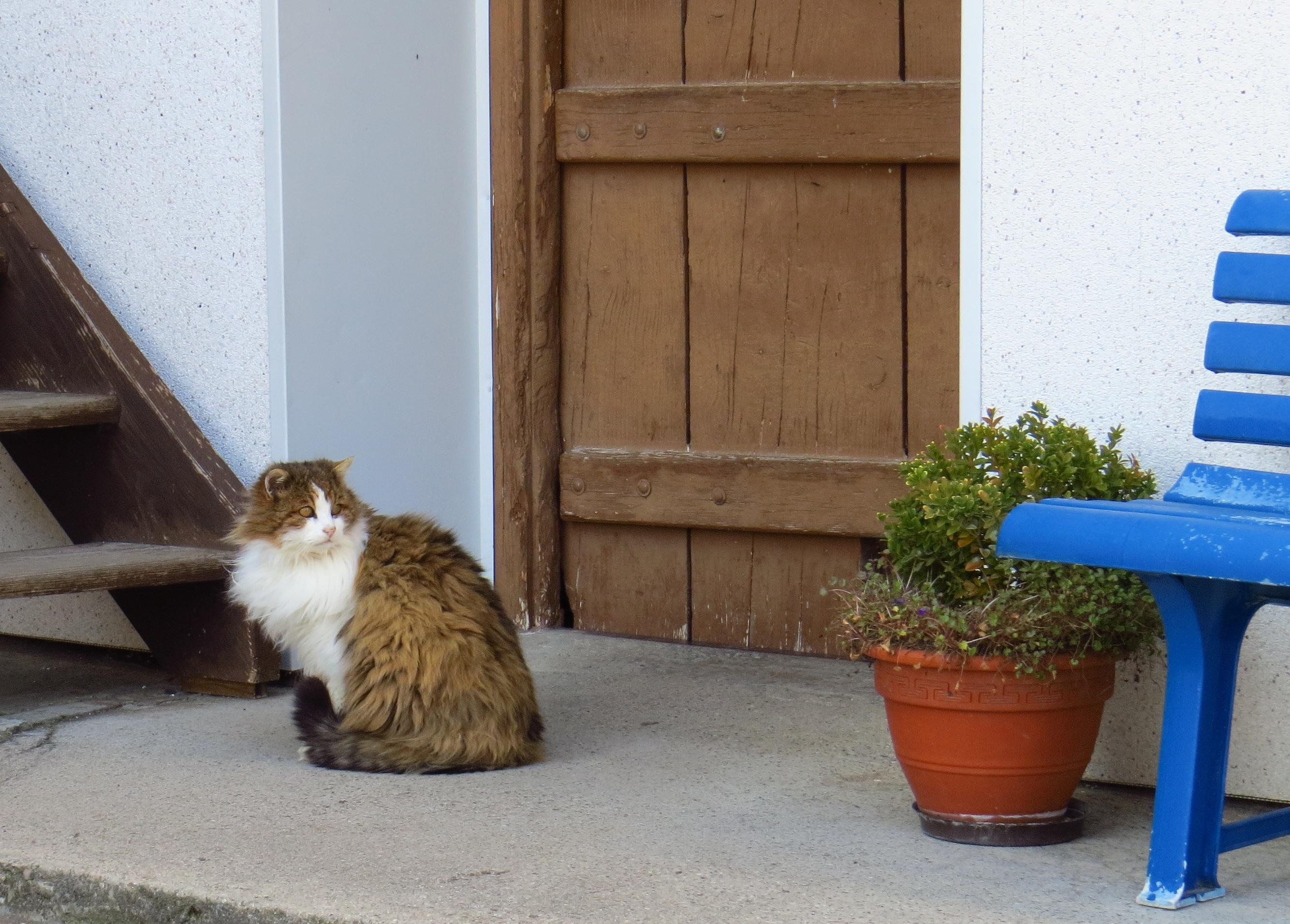 mladý zázvor mačička