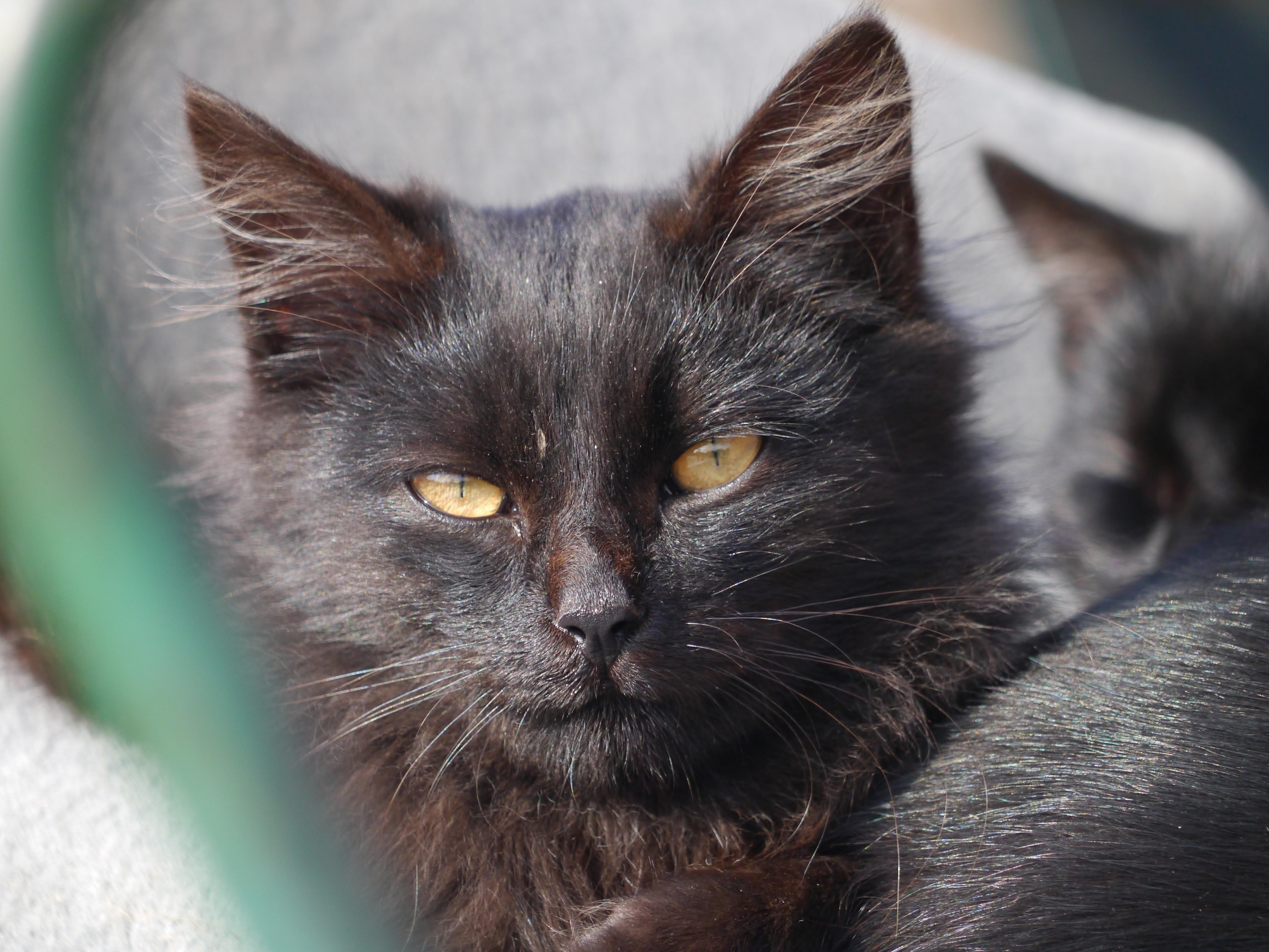 Černá kočička zblízka