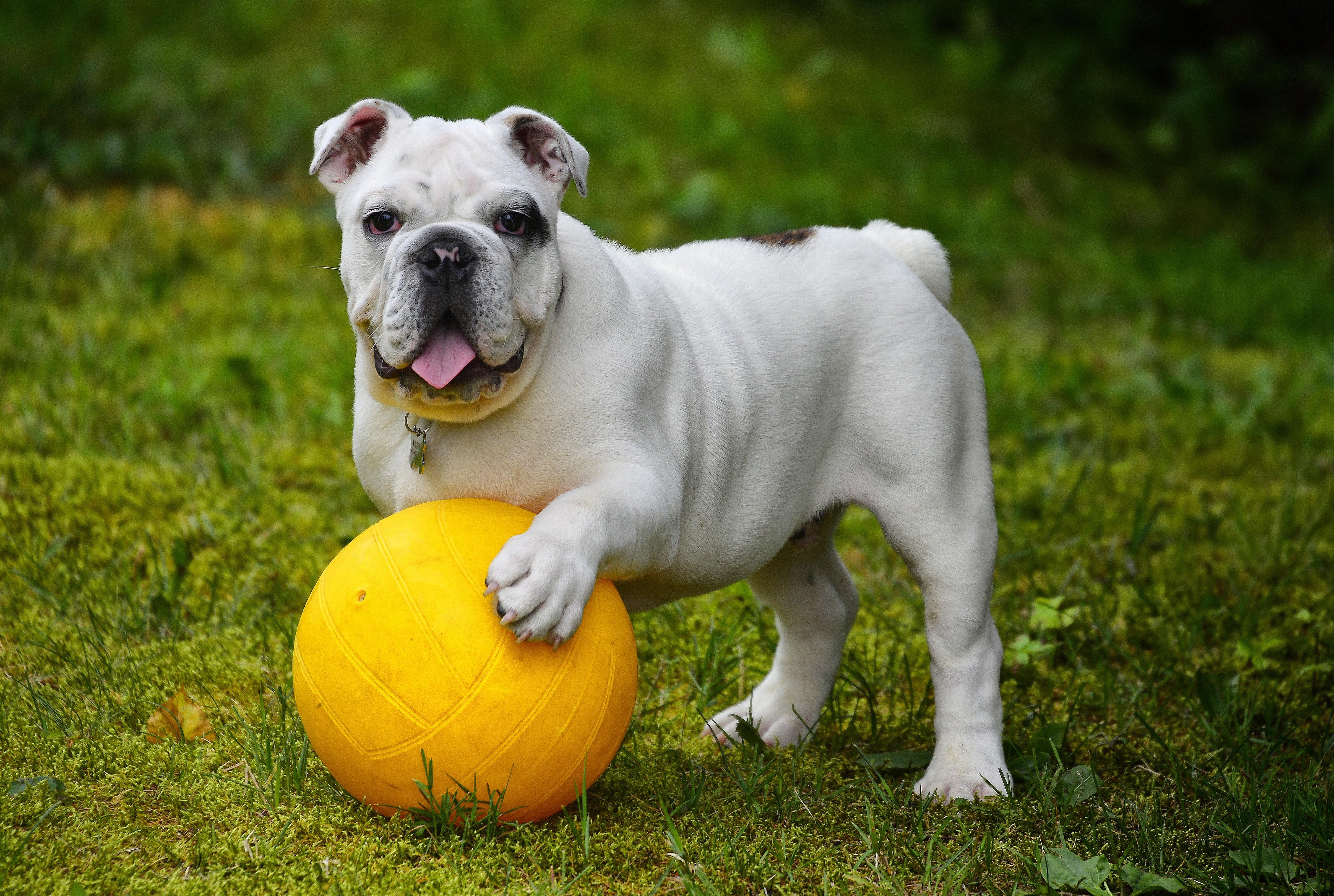 также занимается картинка собака с мячиком обыкновенными