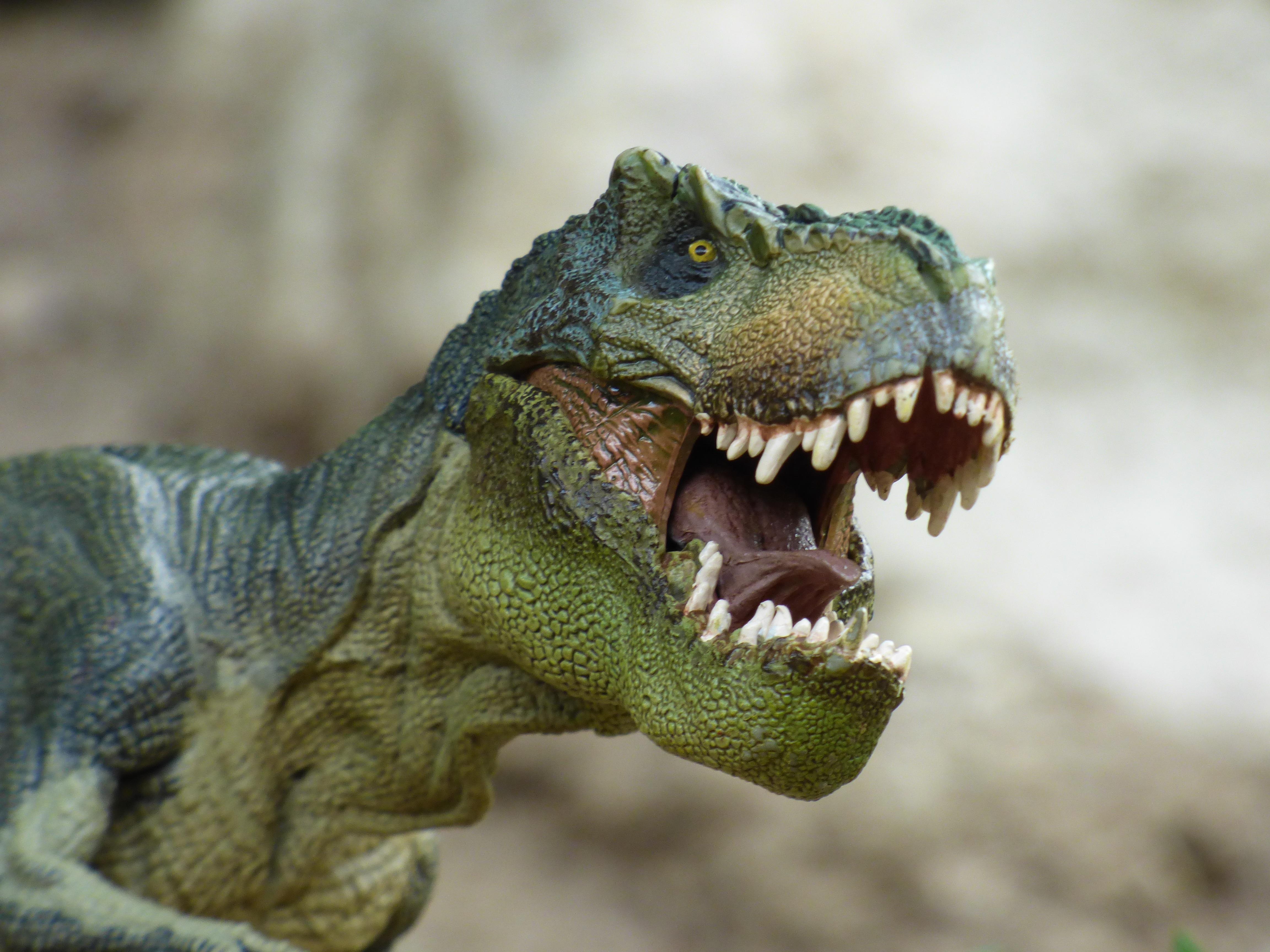Fotos gratis  juego fauna silvestre reptil juguete Iguana de