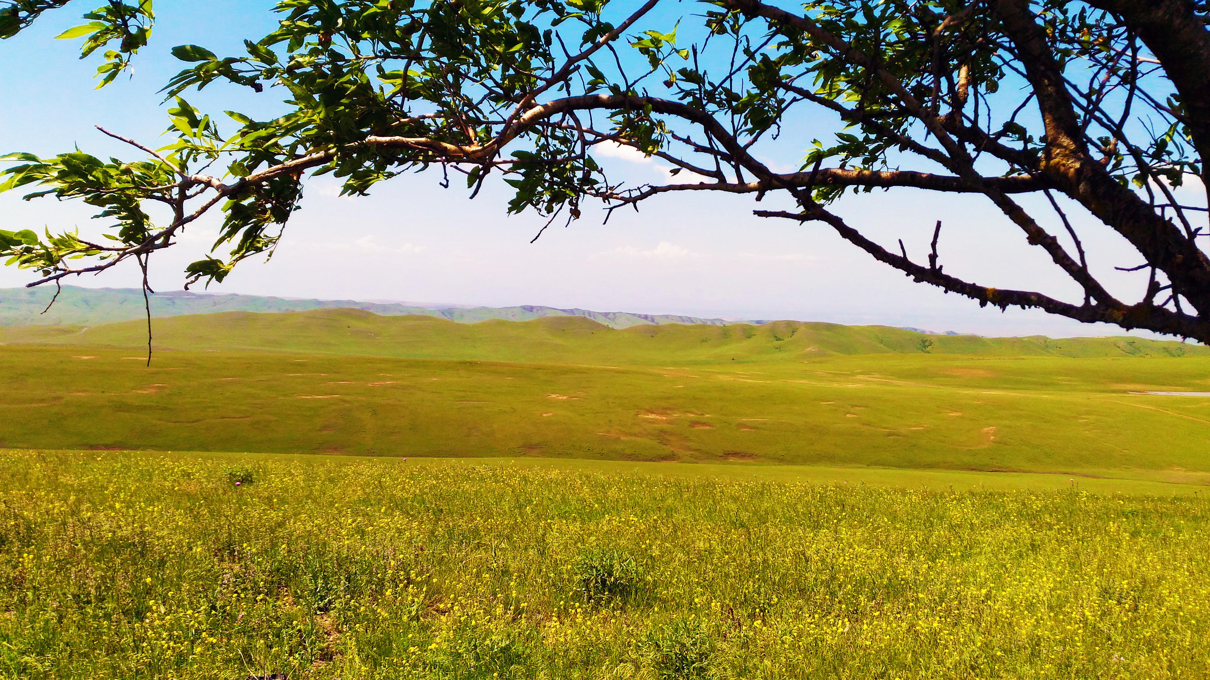 free images   georgia  grassland  ecosystem  prairie
