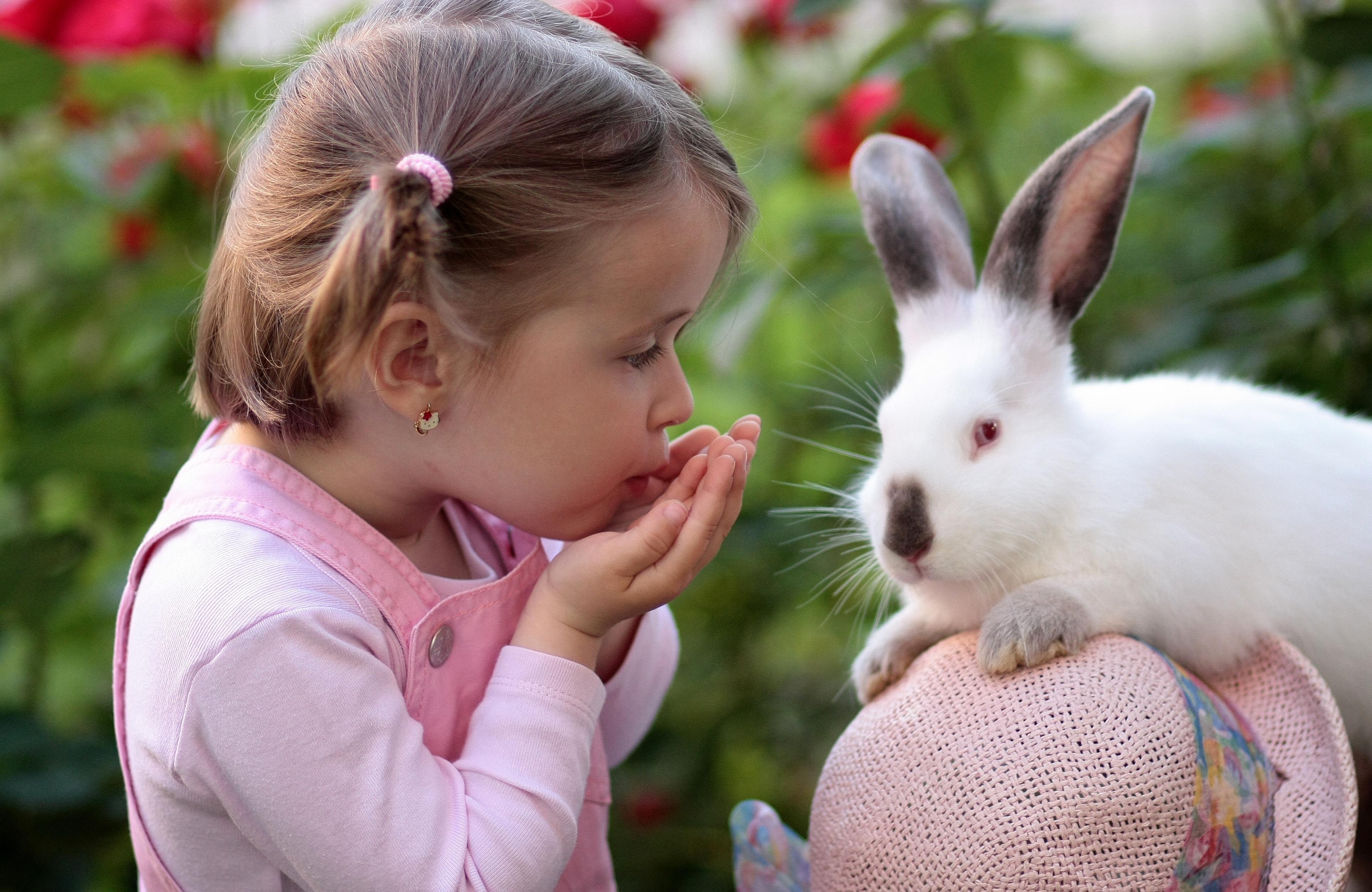 Девочка с кроликами картинки, приколы