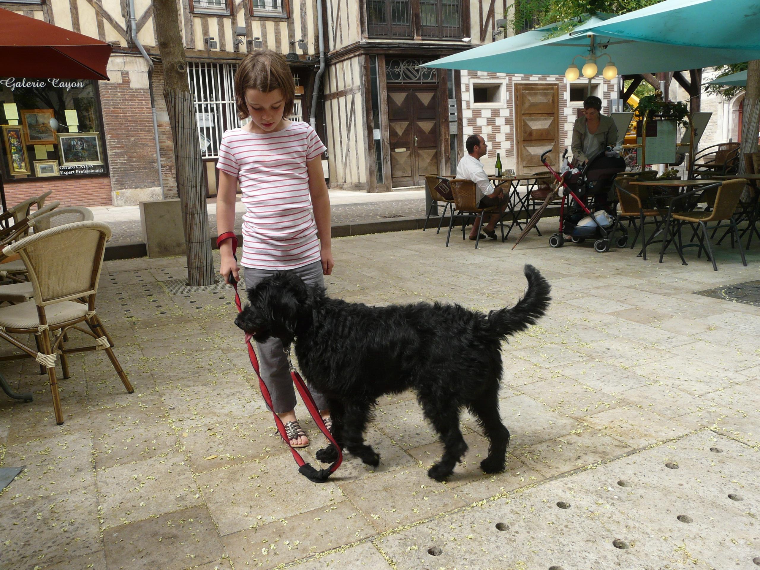 Free Images : play, animal, pet, child, playing, black