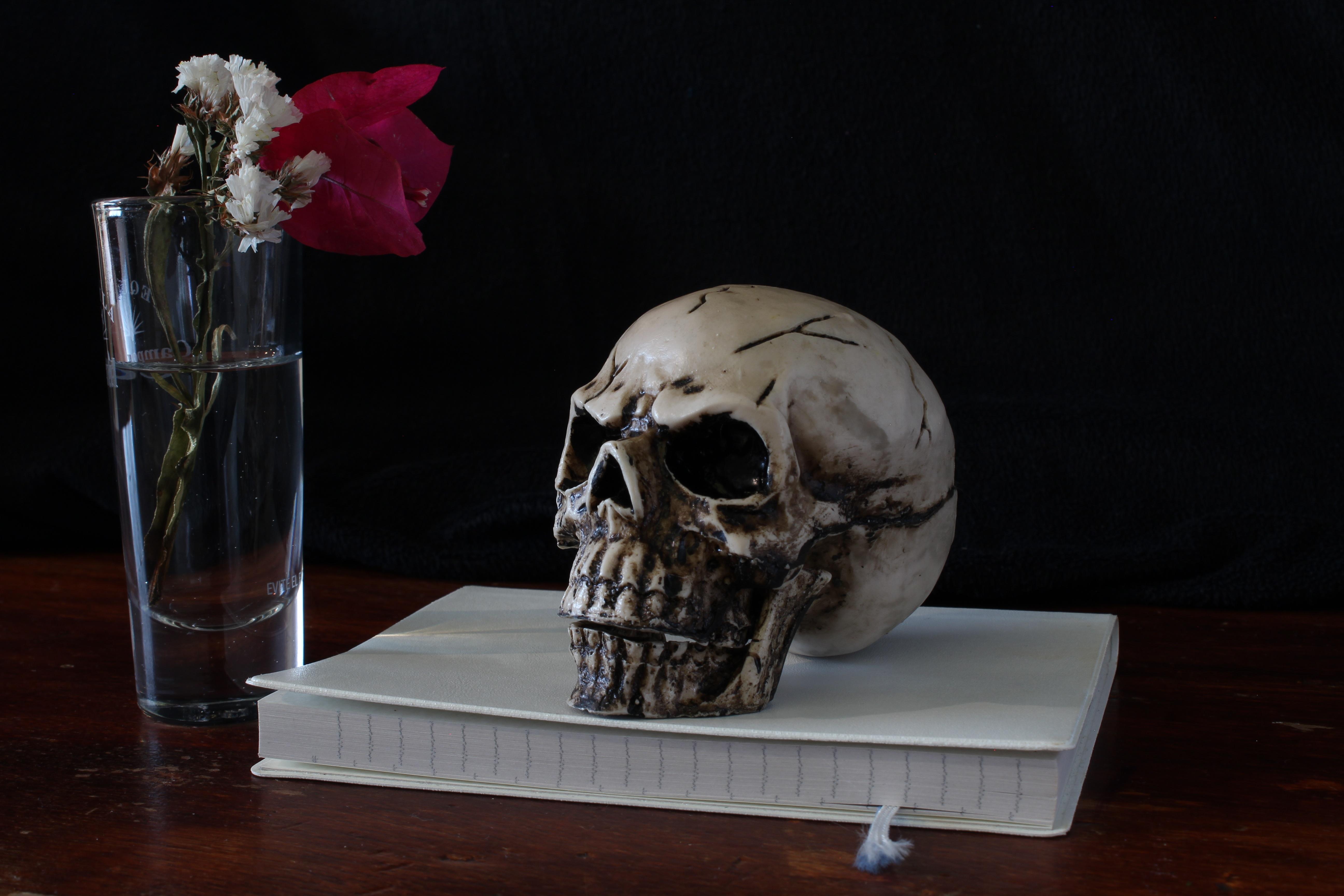 Fotoğraf Bardak Heykel ölüm Kafatası Natürmort Kemik Boyama