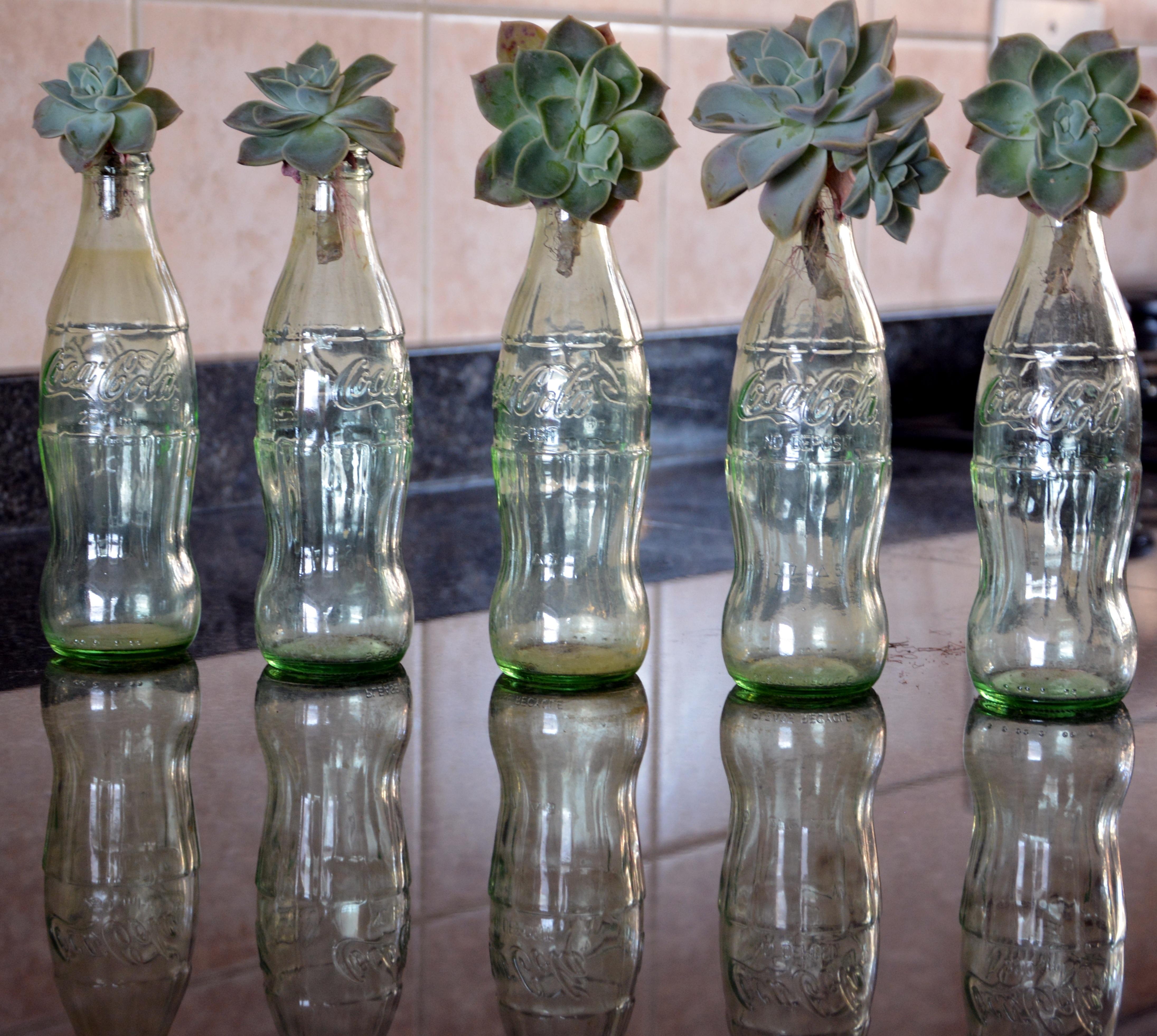 Fotos gratis vaso florero decoracin reflexin iluminacin