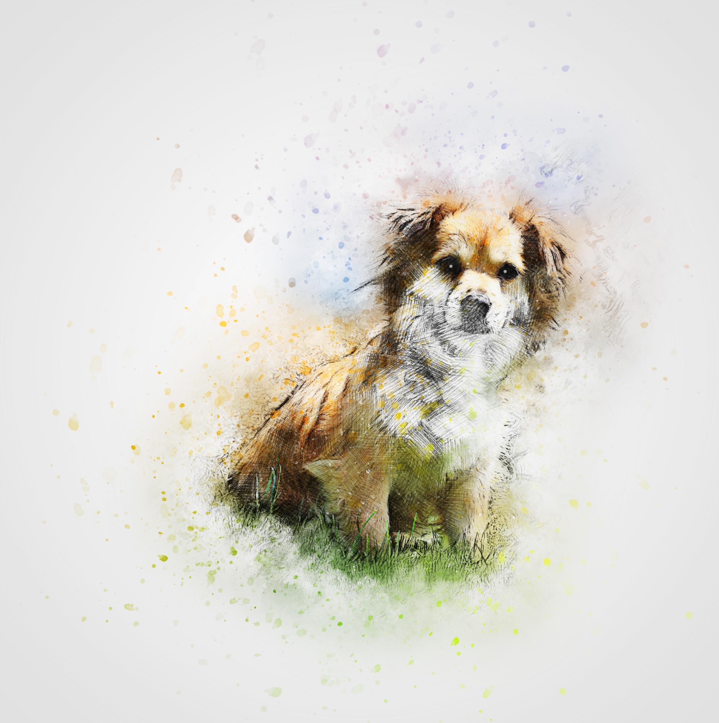 Grass Abstract Vintage Puppy Dog Cute Pet Mammal Art Illustration Design Vertebrate Breed Lhasa Apso